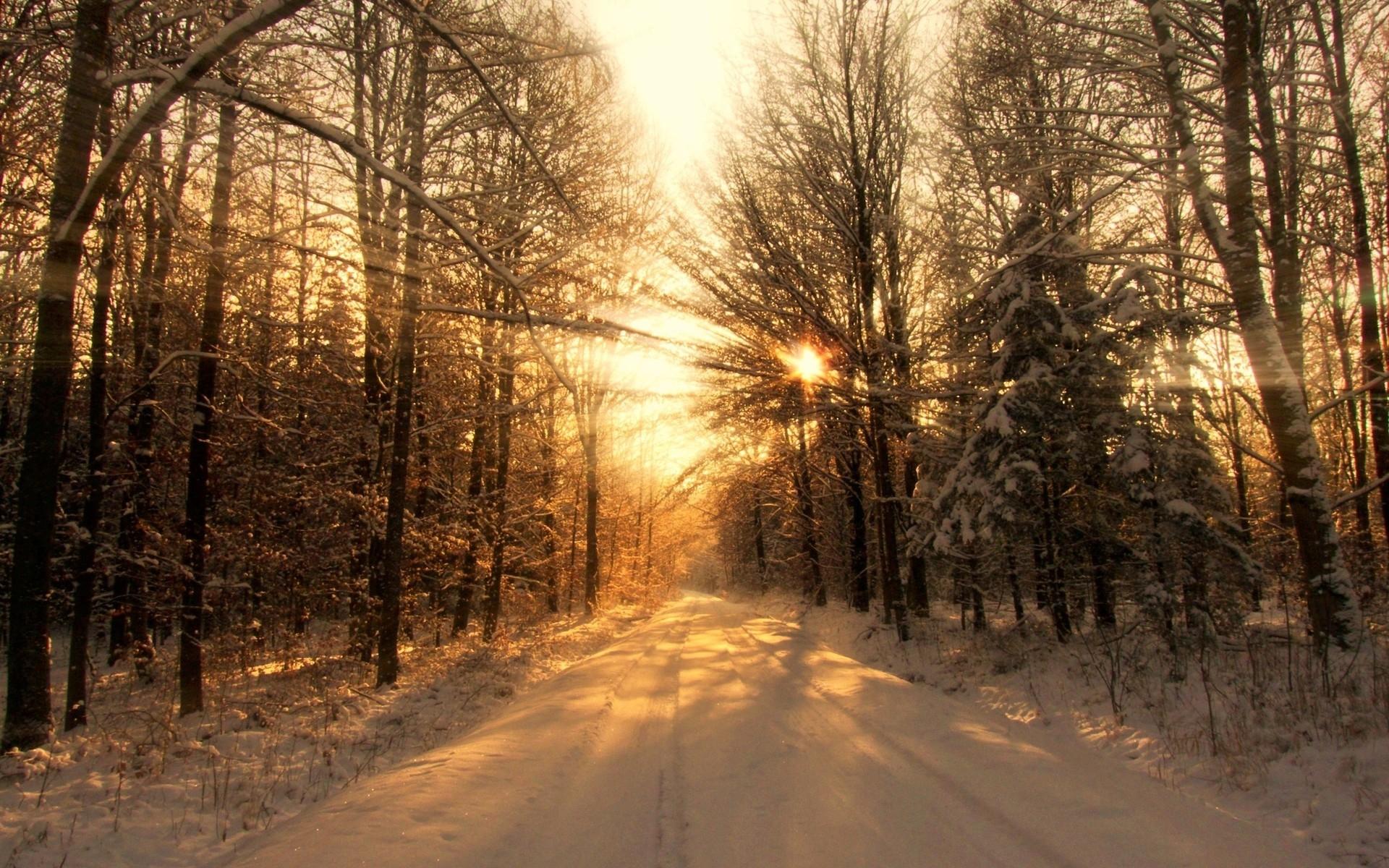 Wallpaper sunlight trees landscape sunset nature sky snow