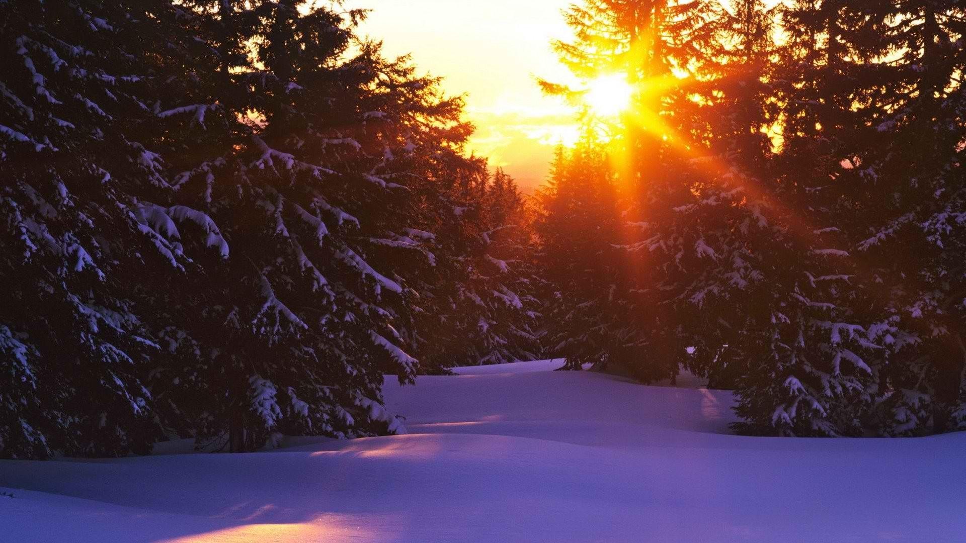 яркое зимнее солнце гиф картинки родовой