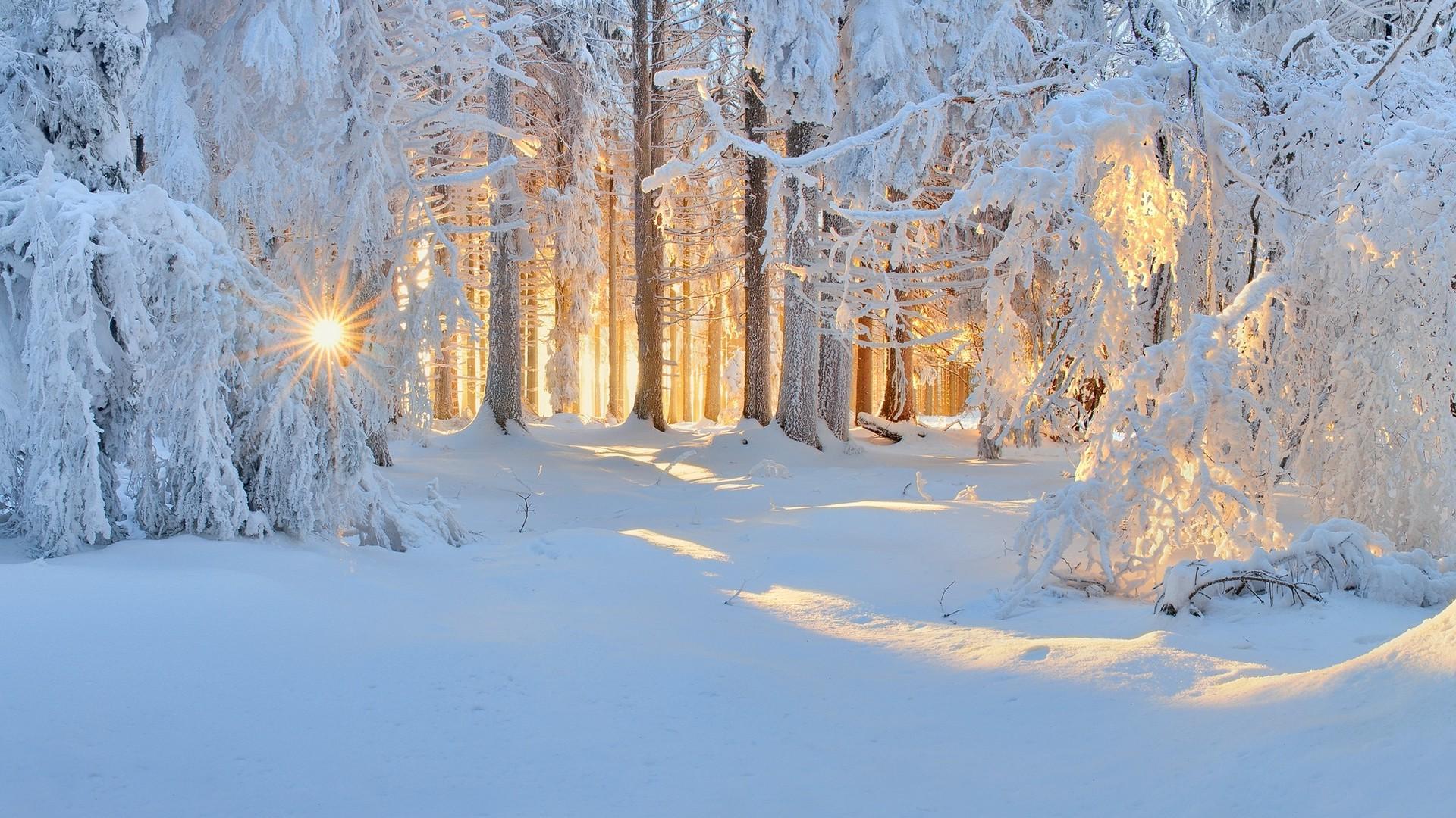 wallpaper : sunlight, trees, landscape, forest, white, nature, sky