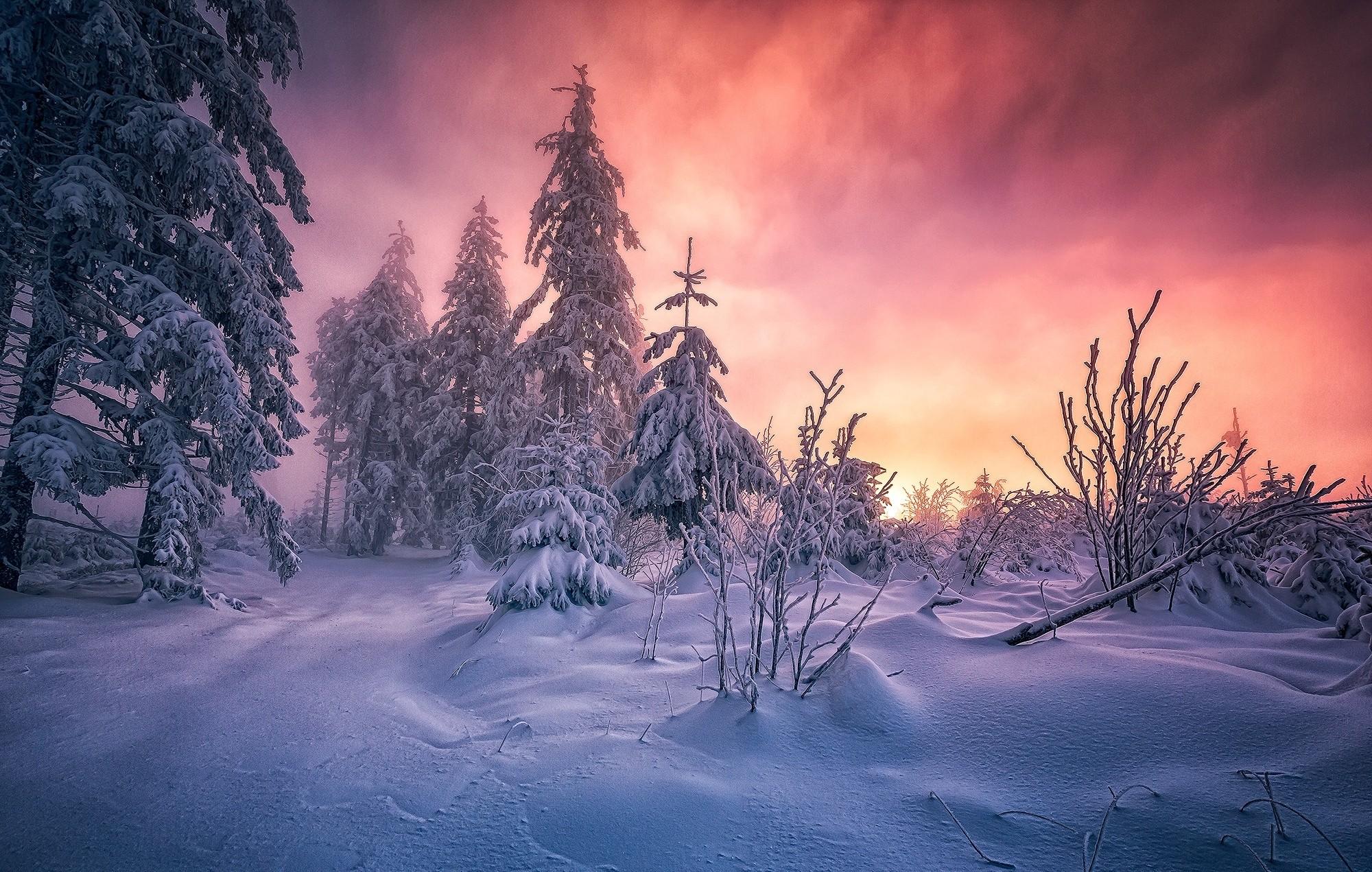 Wallpaper  sunlight, trees, landscape, forest, white, nature ...