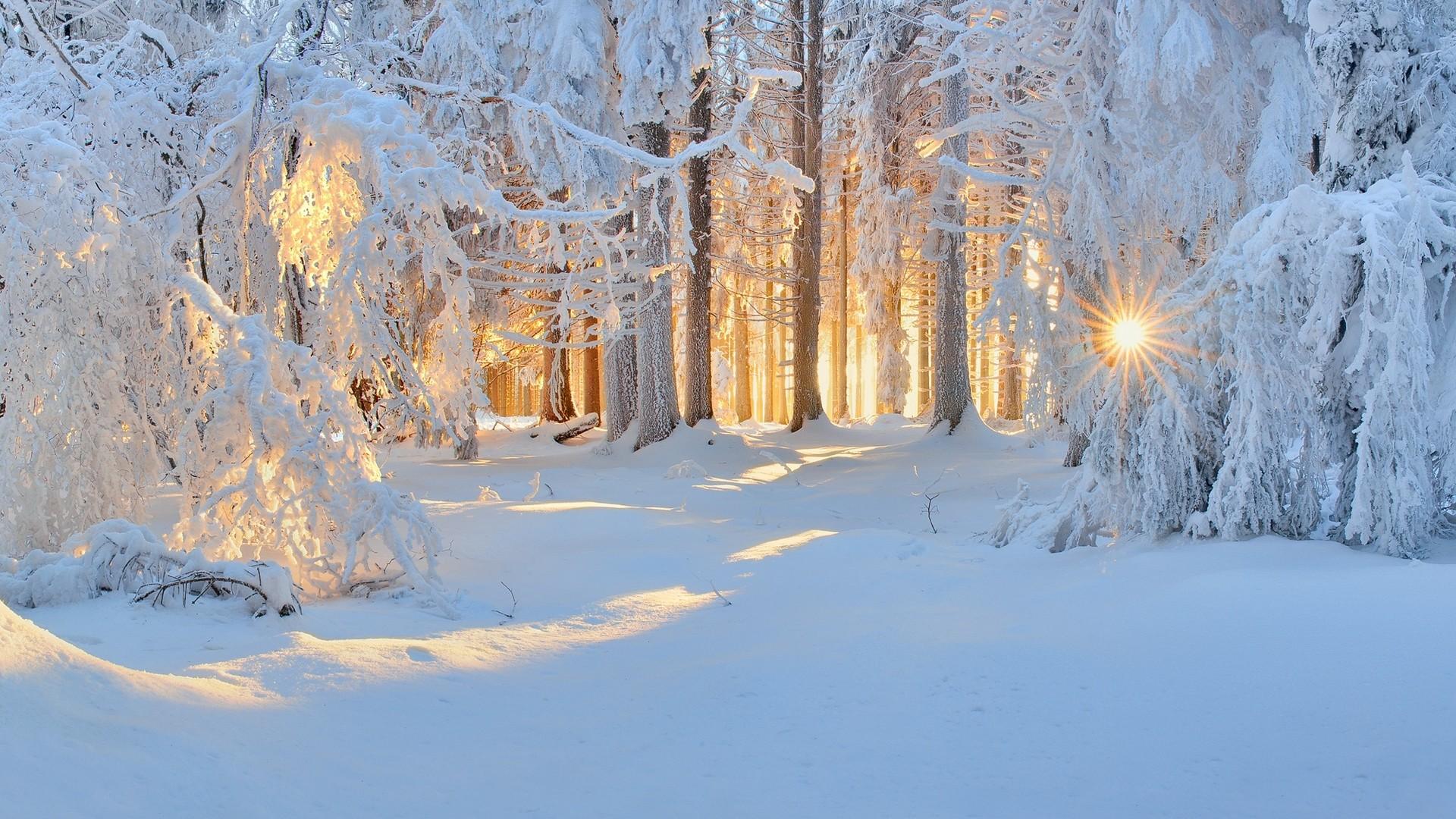 Fond d'écran : lumière du soleil, des arbres, paysage ...
