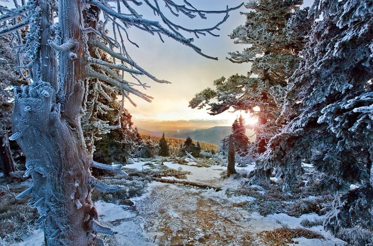 Фото зимний художественный пейзаж леса хочу поделиться