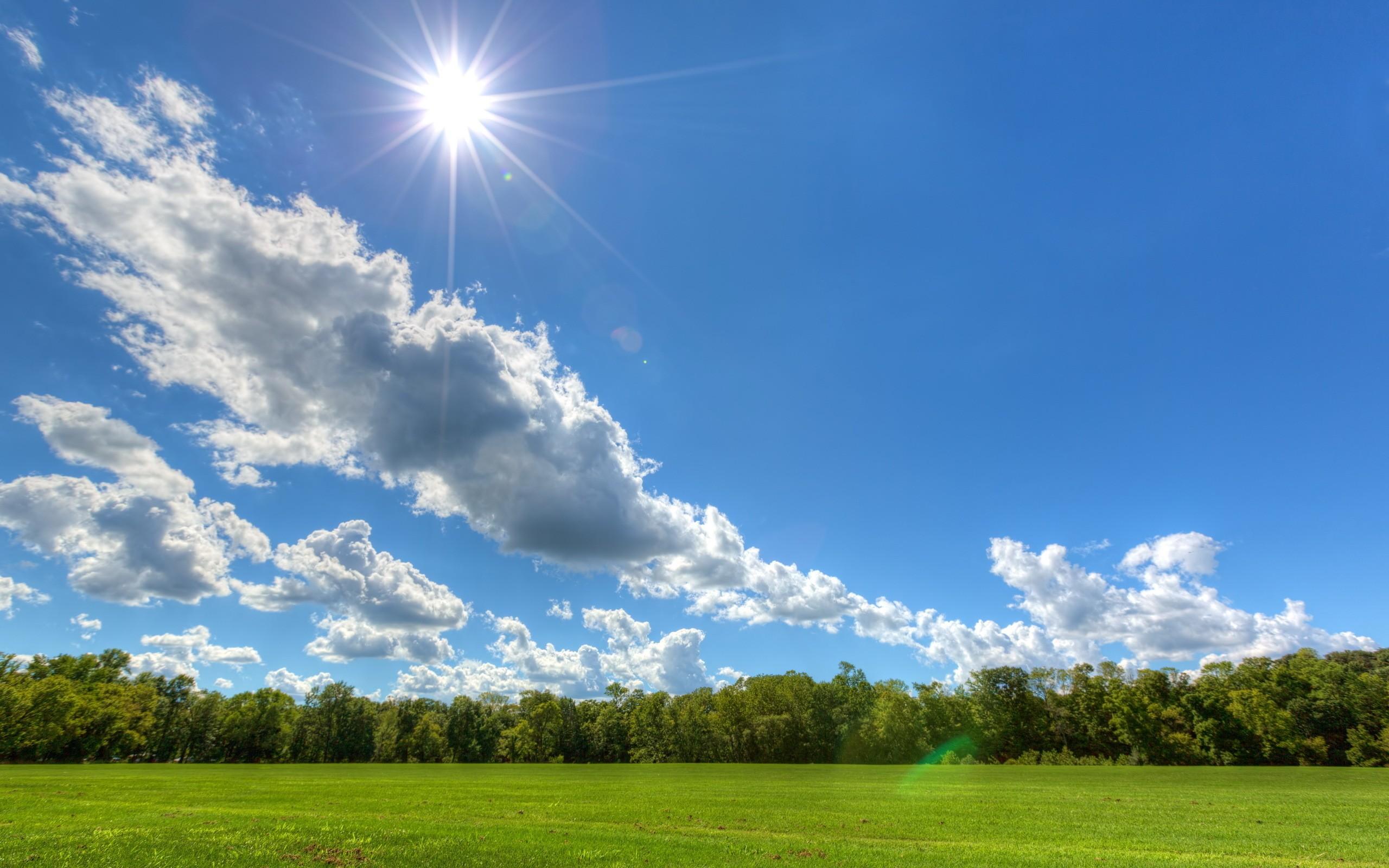 фото небо с облаками и солнцем листья листочки