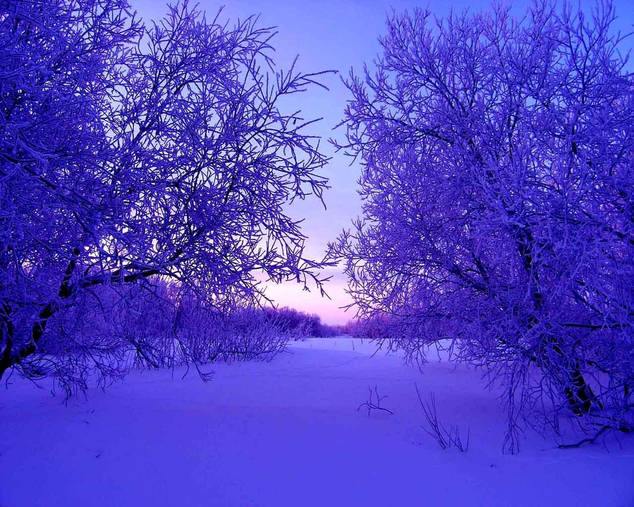fond d 39 cran lumi re du soleil des arbres paysage la nature ciel hiver violet branche. Black Bedroom Furniture Sets. Home Design Ideas