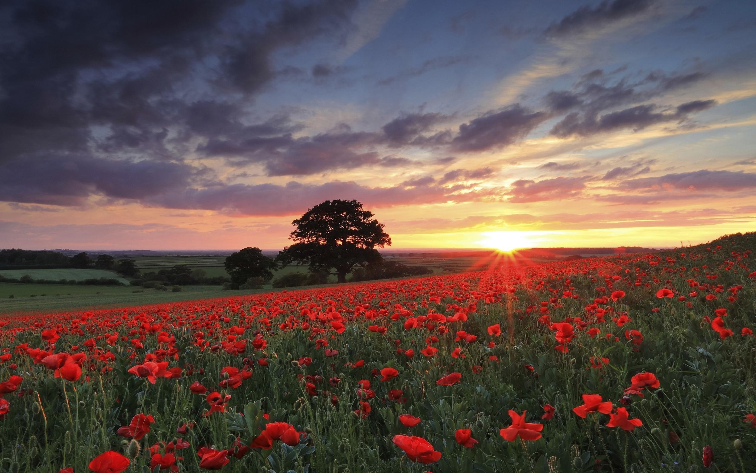 Spring Flowers Tulips Field Sunrise Grass Clouds: Wallpaper : Sunlight, Trees, Landscape, Sunset, Flowers