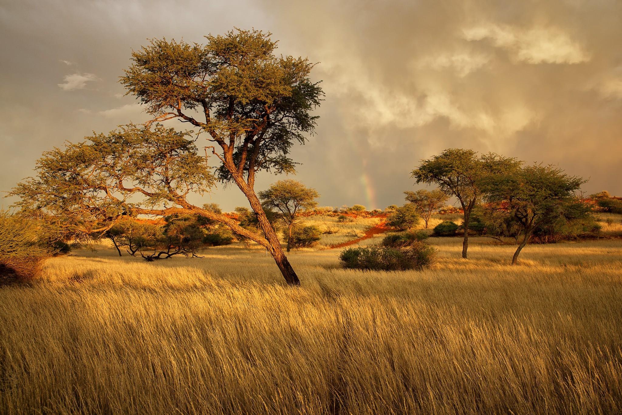 Картинки пейзаж африки