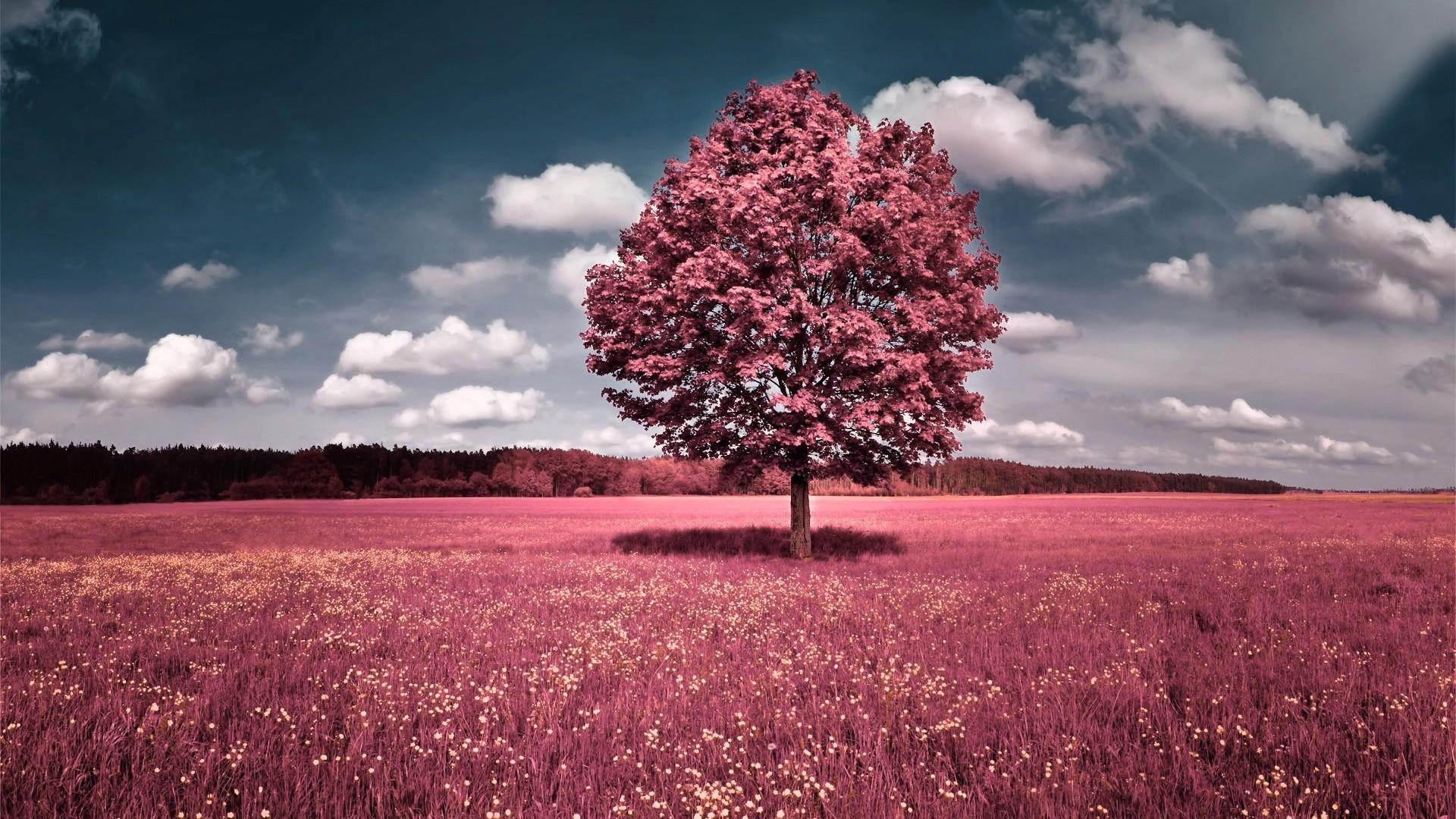 Wallpaper : sunlight, trees, landscape, sunset, nature, sky, field ...