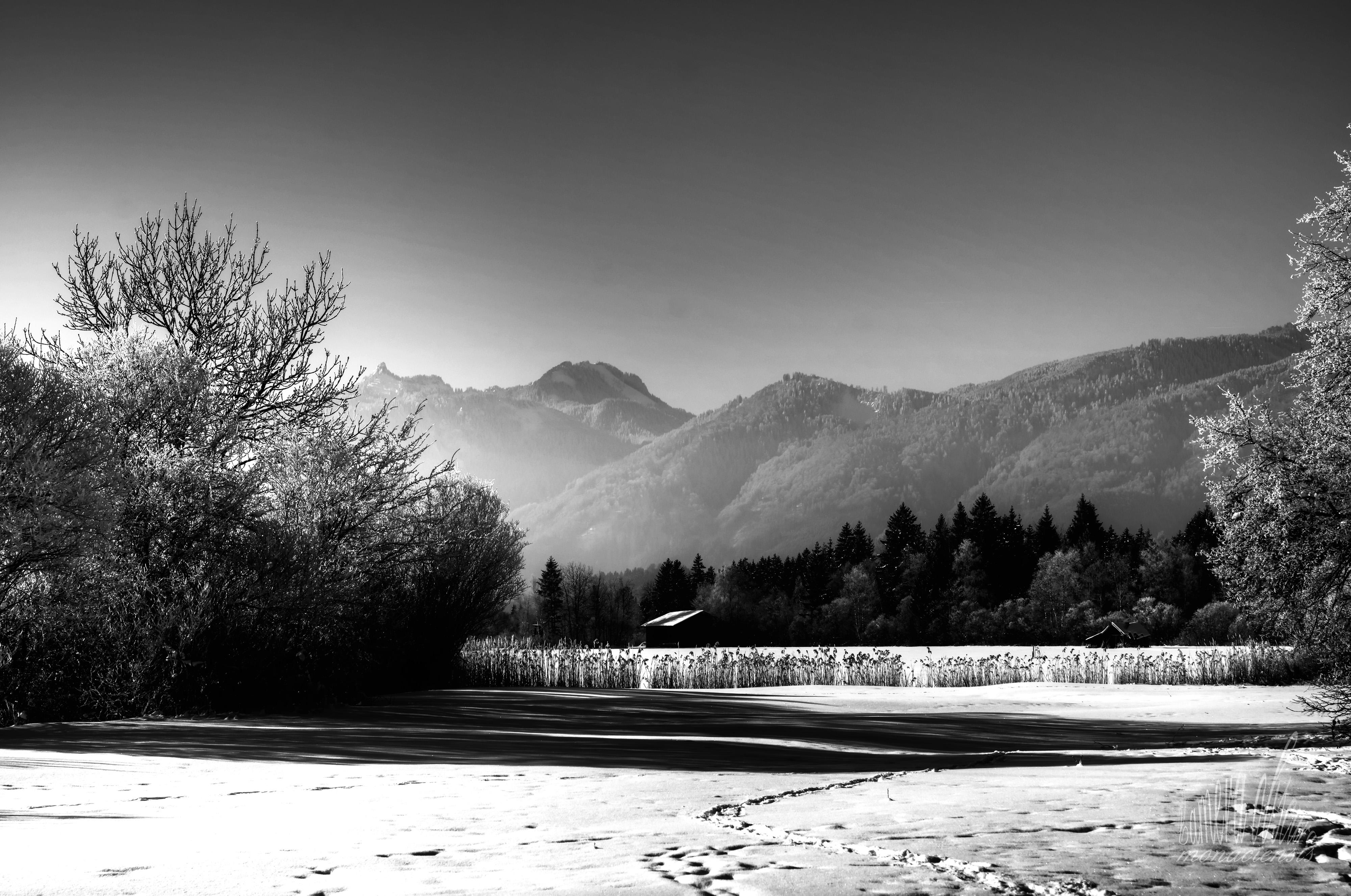 Sfondi Luce Del Sole Alberi Paesaggio Bianca Montagne