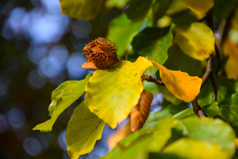 leaf urban sverige