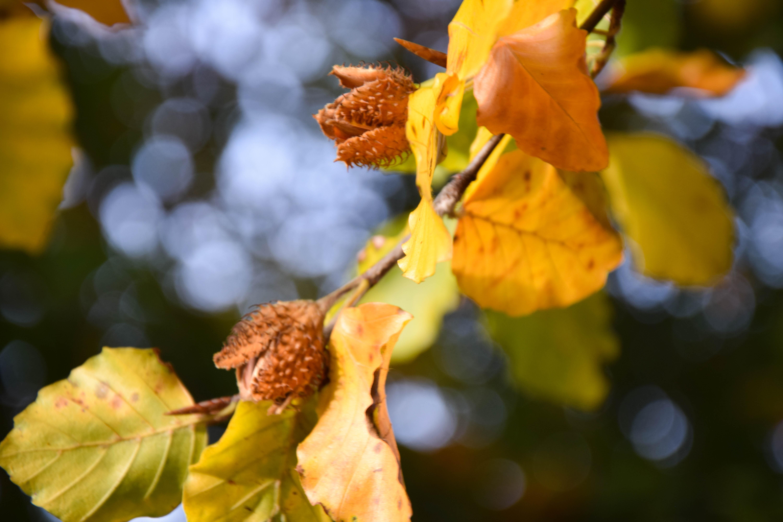 Atemberaubend Hintergrundbilder : Sonnenlicht, Bäume, Blätter, Natur, Pflanzen #YV_13