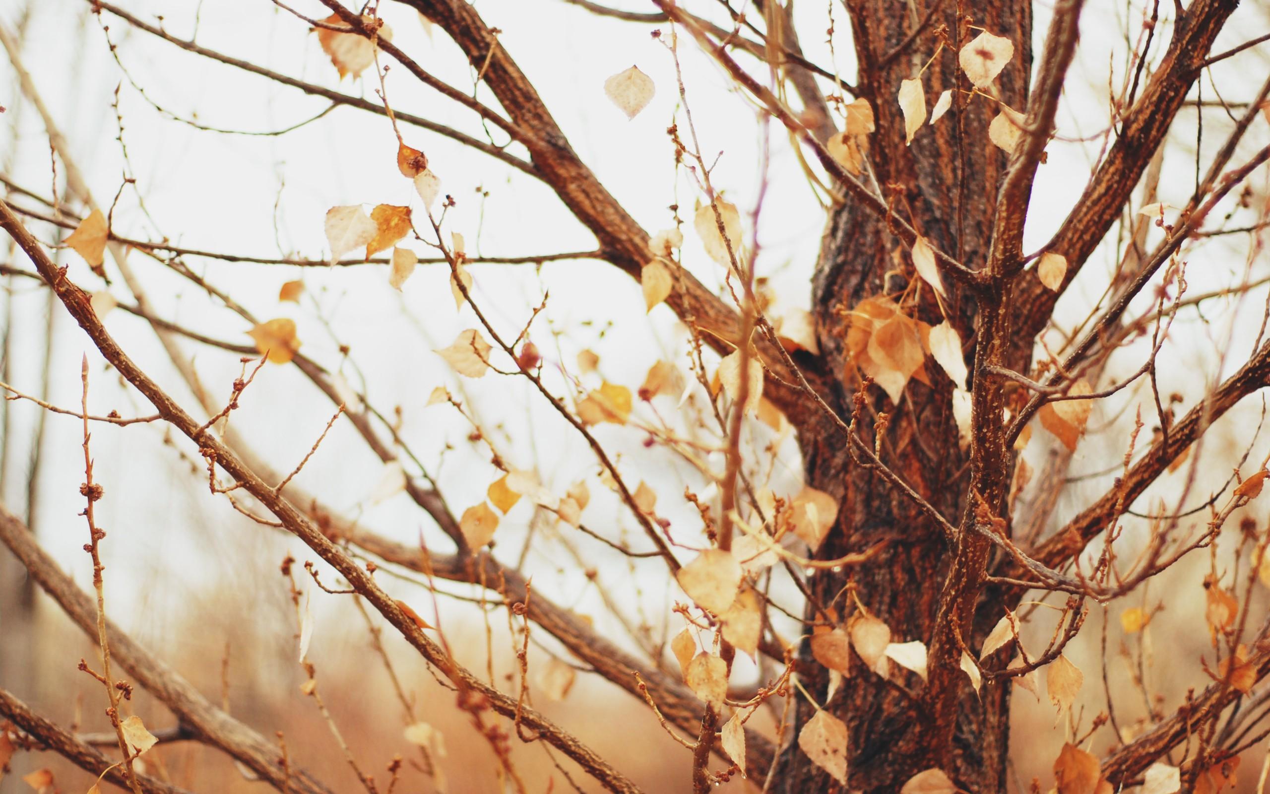 Пропитка по дереву тик цвет фото представляет особый