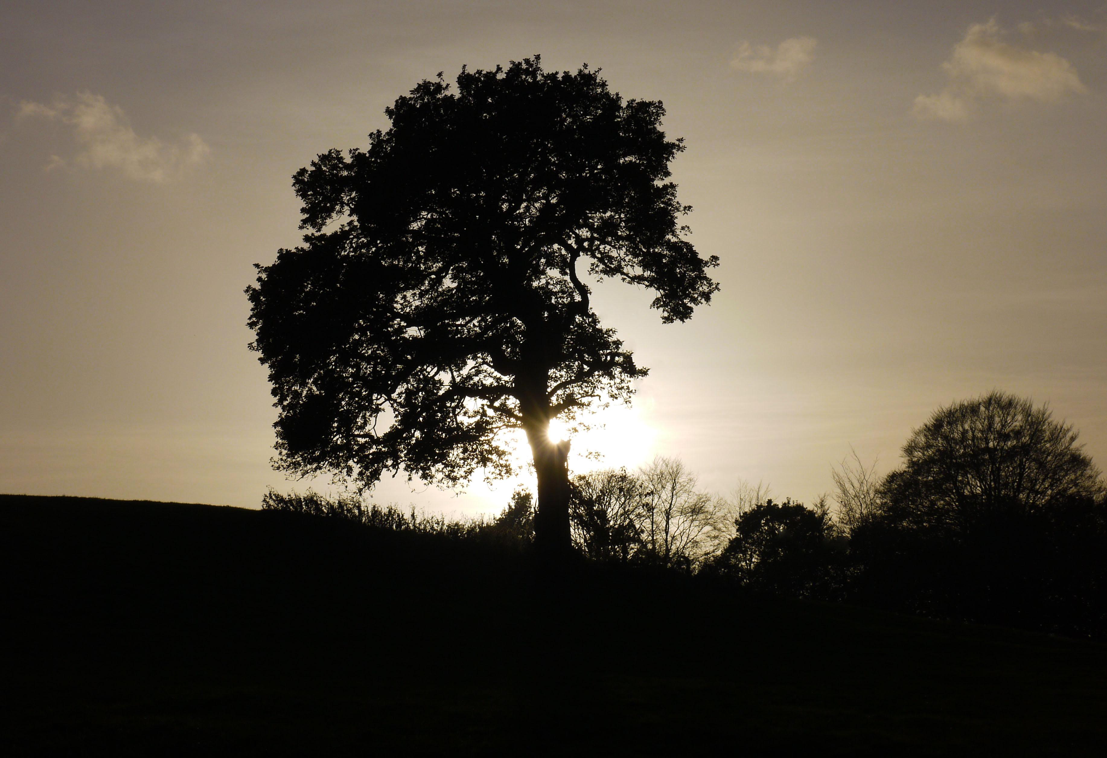 Hintergrundbilder Sonnenlicht Bäume Zitat