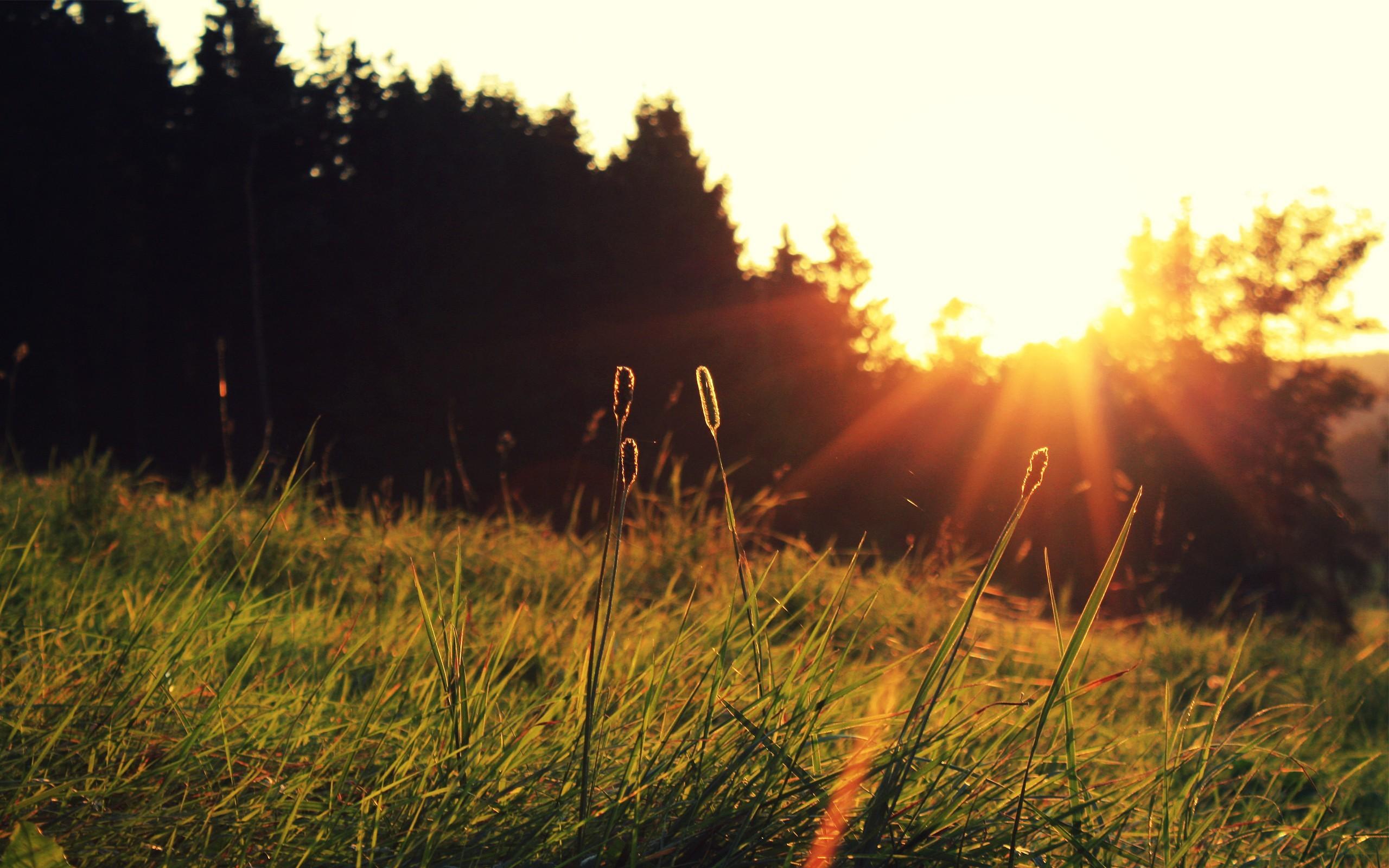 лето трава солнце картинки пиццерия, очень