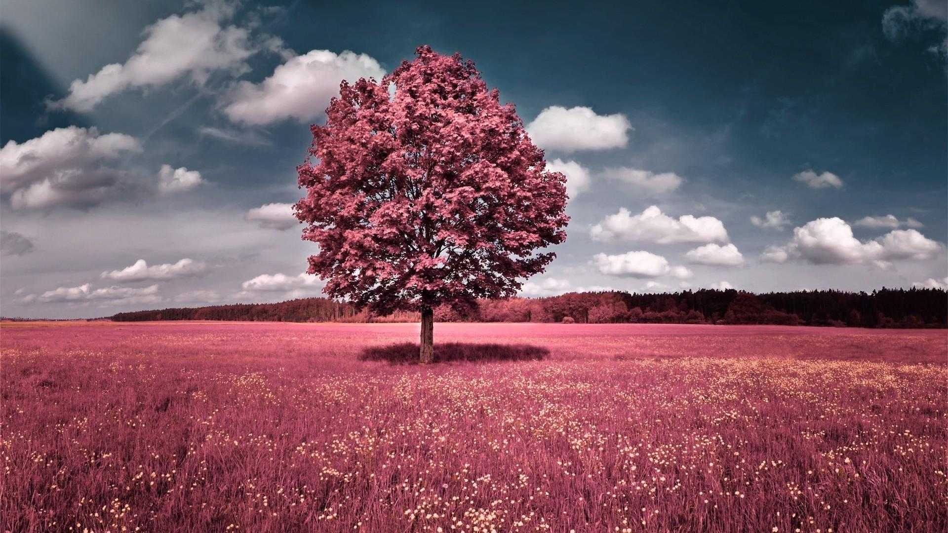 Wallpaper : sunlight, trees, sunset, nature, sky, field, clouds ...