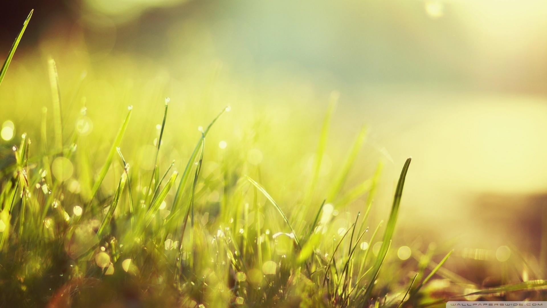Hình Nền ánh Sáng Mặt Trời Nước Thiên Nhiên Cánh đồng