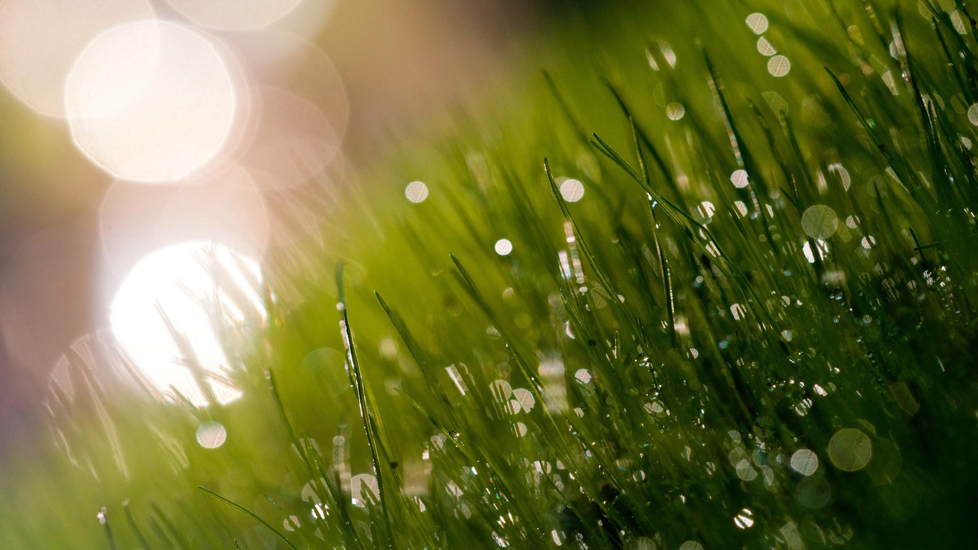 лучи солнца на траве картинки организовать пространство