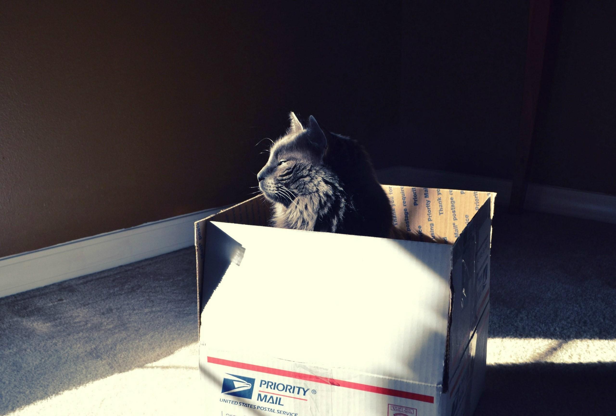 Čierna mačička tapety