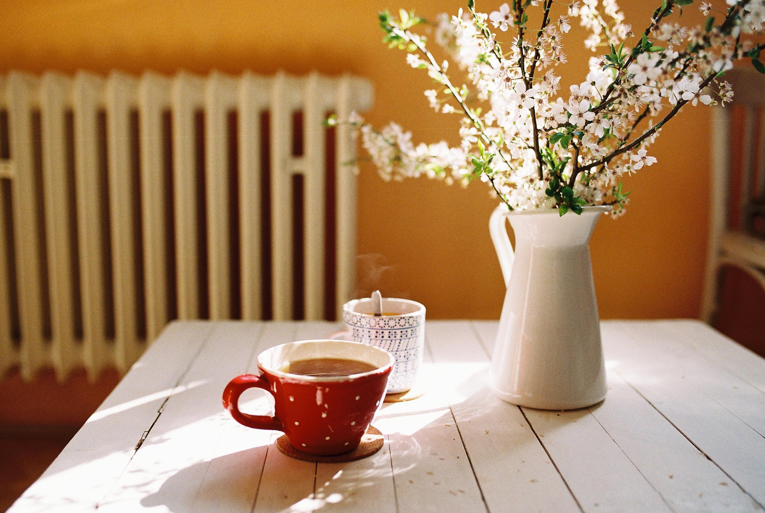 wallpaper sunlight white flowers room red table