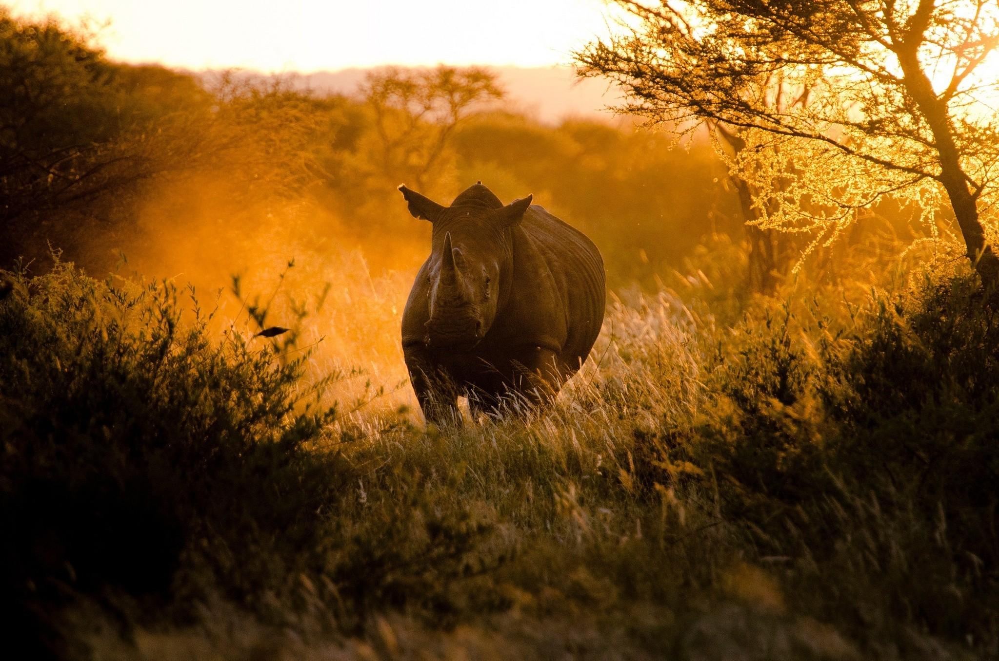 Wallpaper Sunset Nature Morning Wildlife Africa