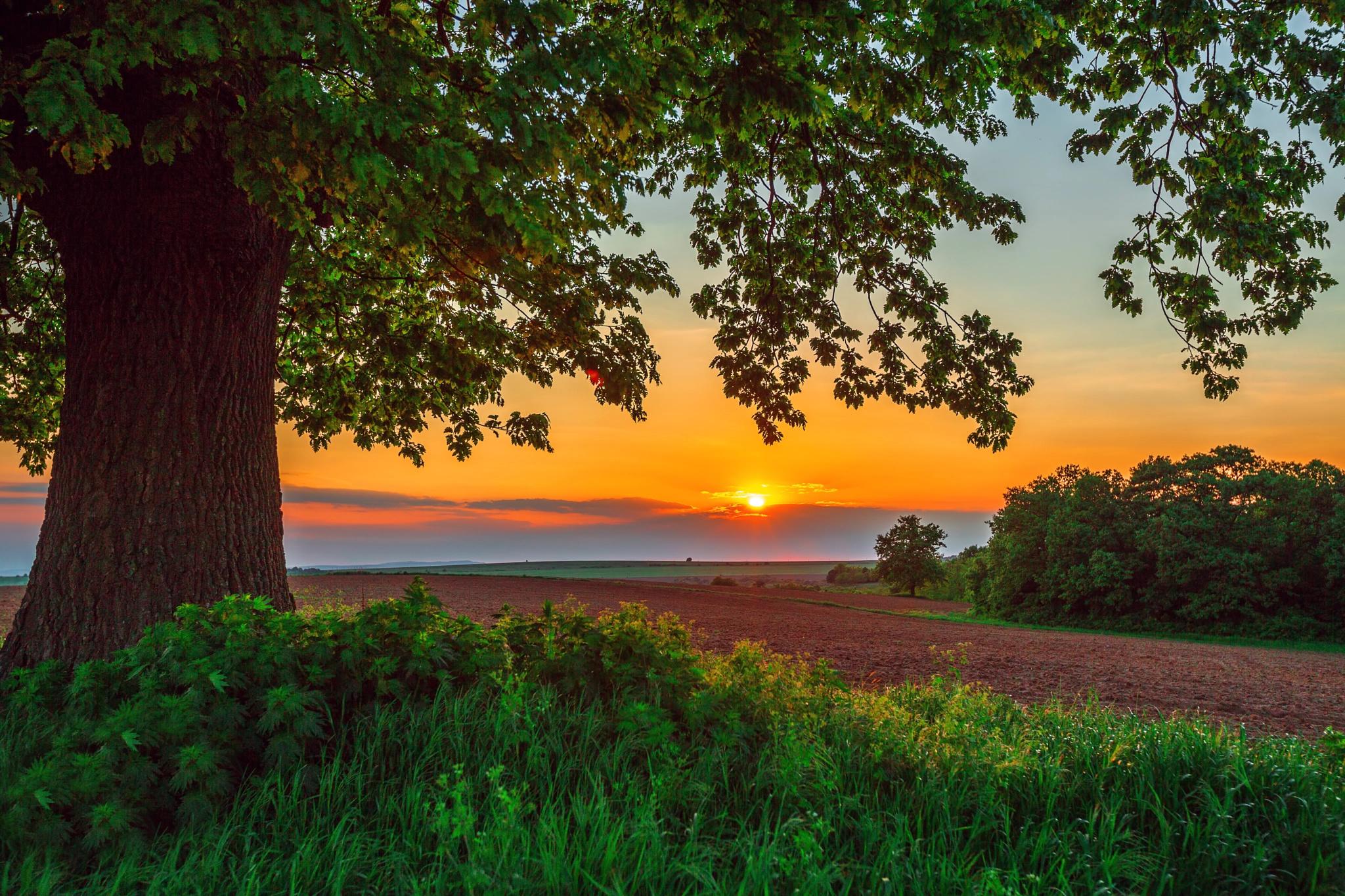Wallpaper Sunset Nature Road Plants Big Tree Clouds