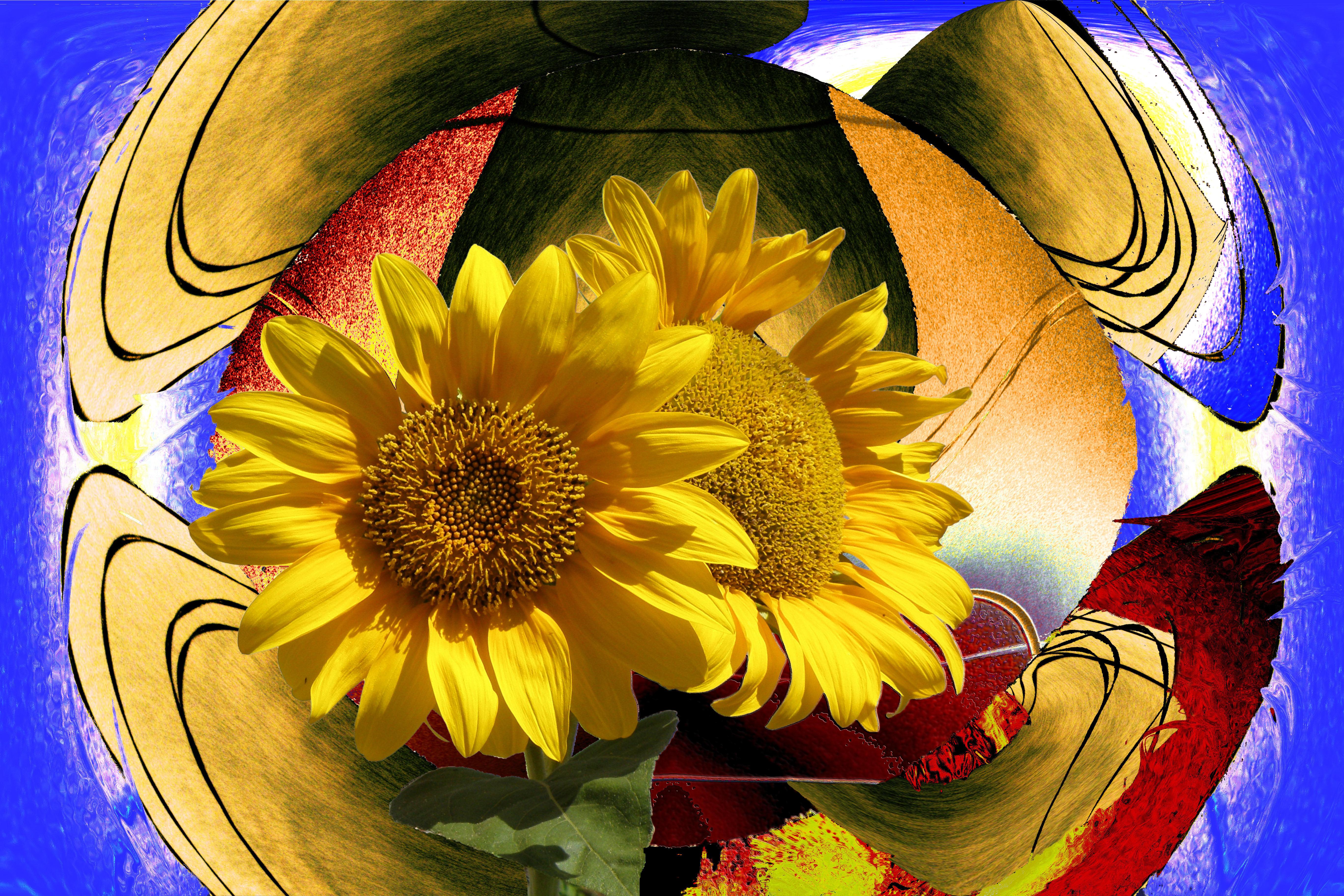 Wallpaper : symmetry, yellow, blue, petals, texture, light, golden