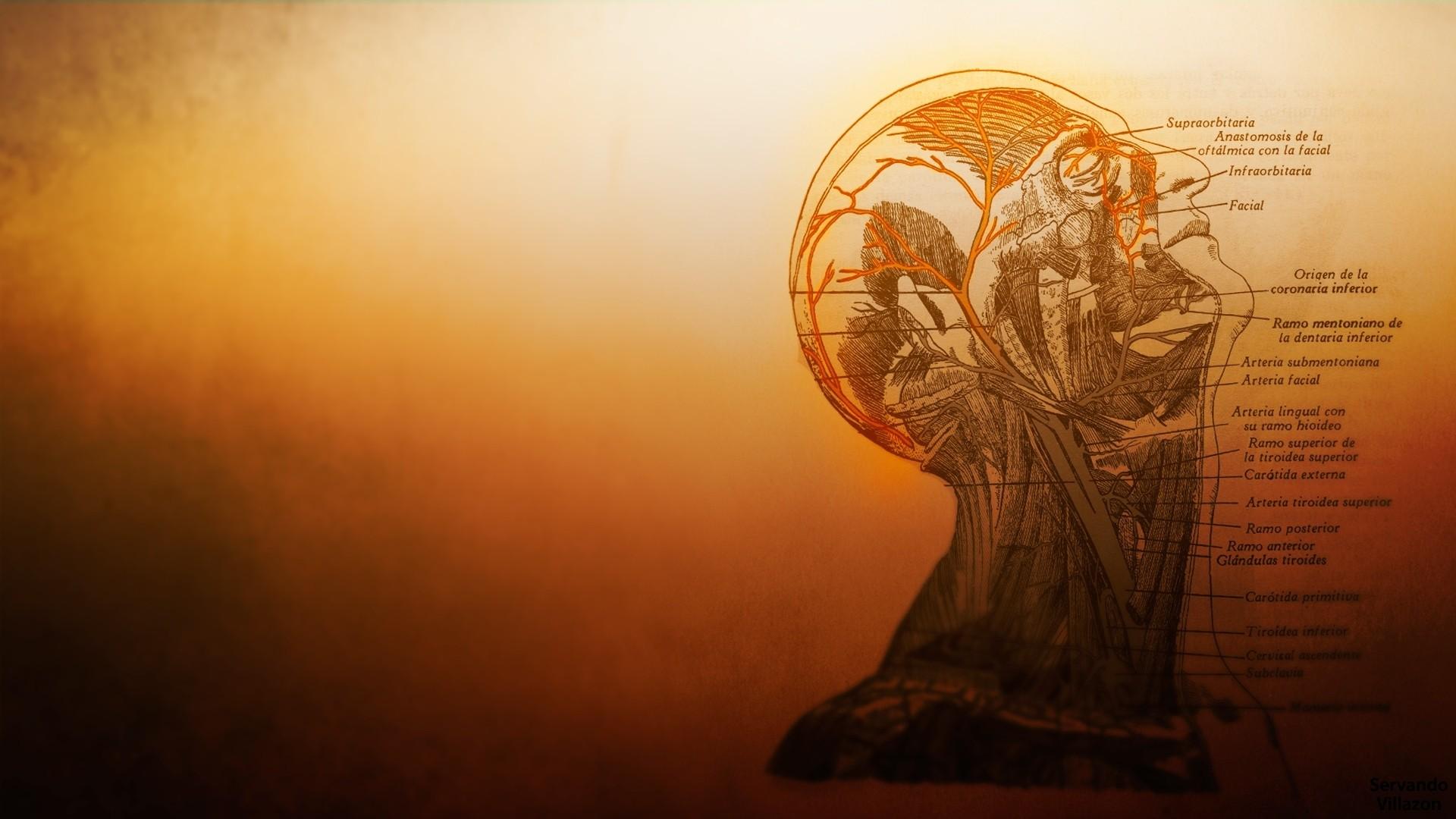 Wallpaper : Temple, Sunlight, Morning, Anatomy, Medicine