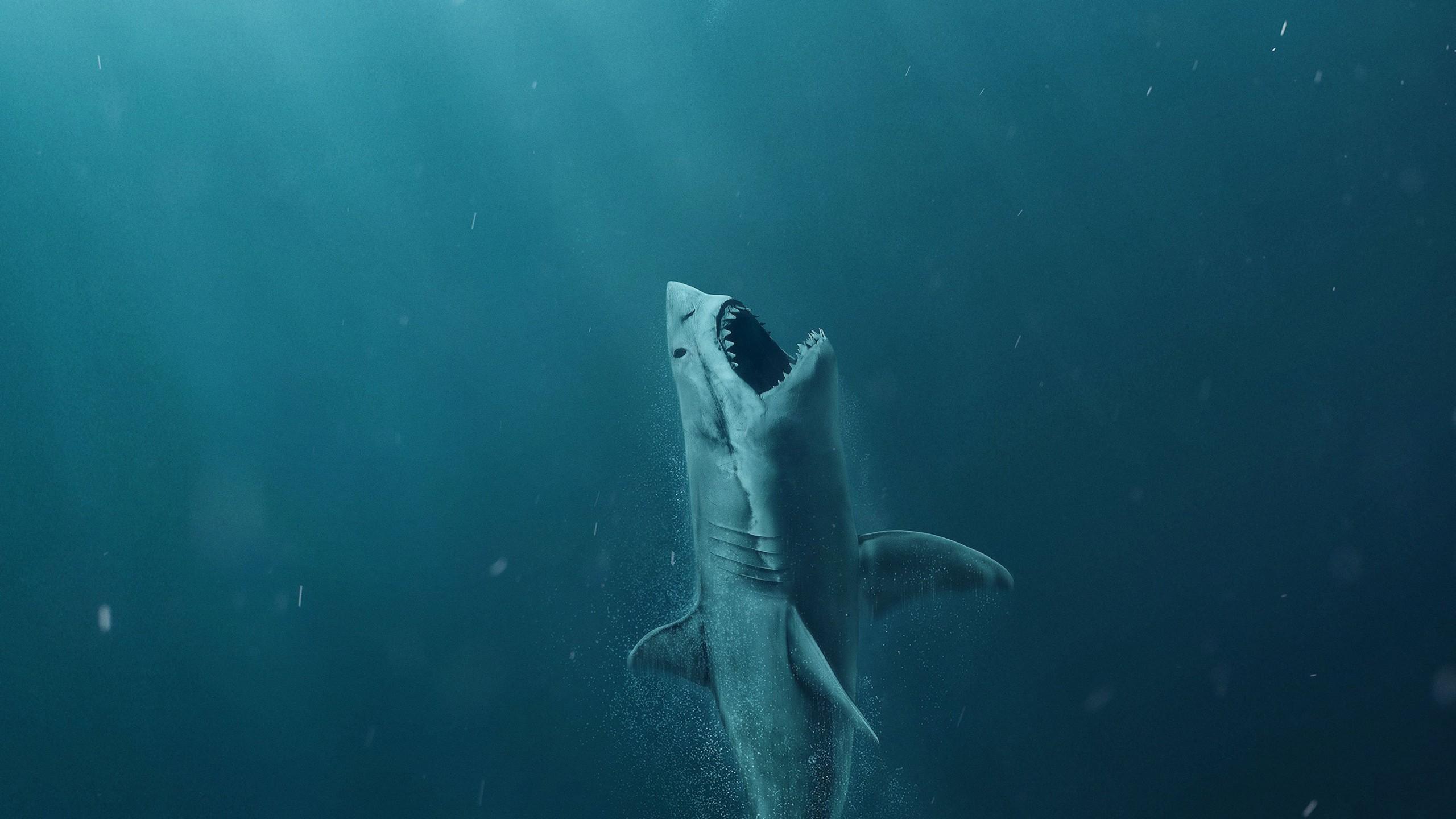 Fond D écran The Meg Requin Mer Affiche 2560x1440