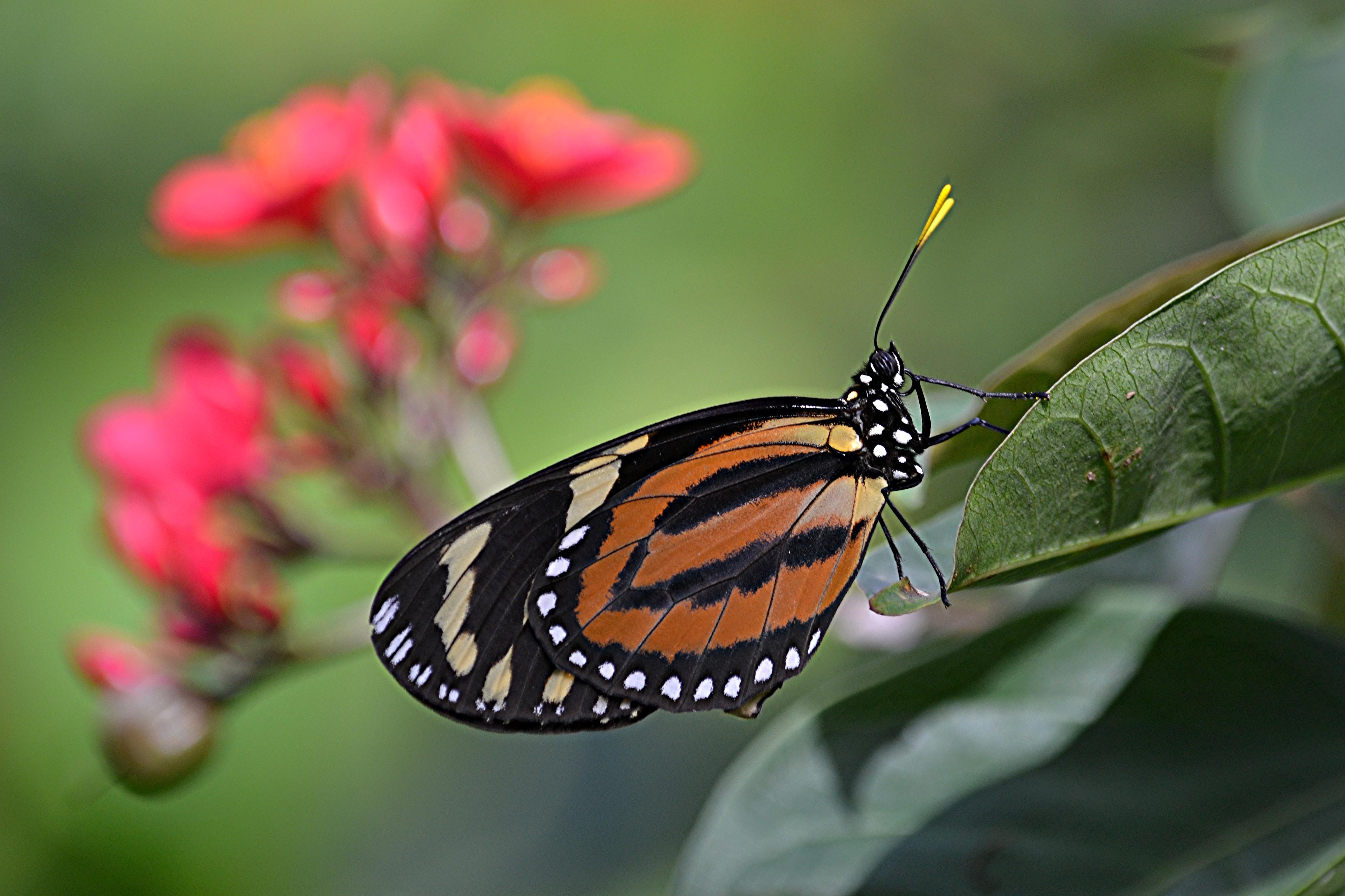Картинки бабочка и тень