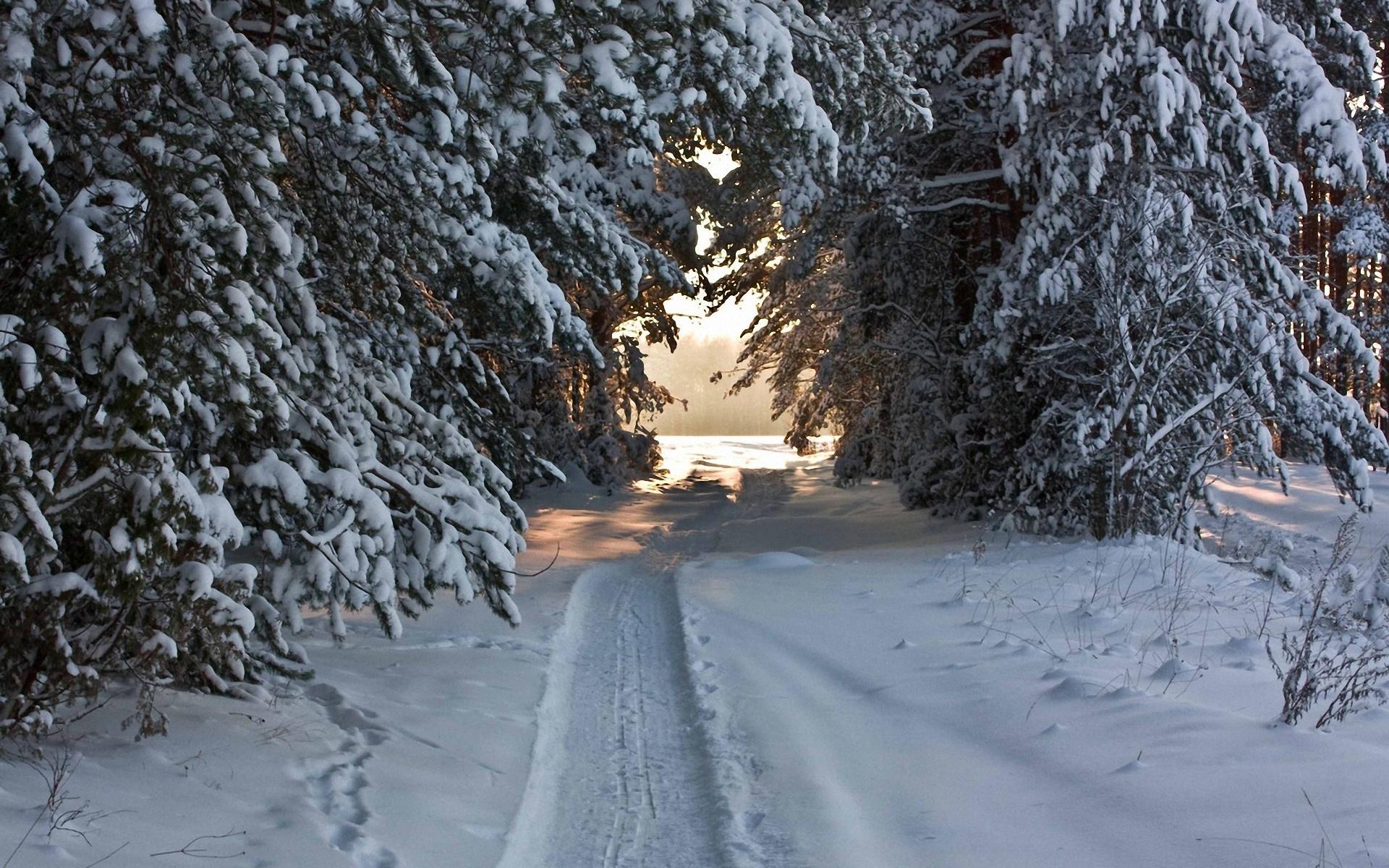 Wallpaper   ski track, winter, trees, snow covered, attire 1920x1200 ... 11cc22aca6a