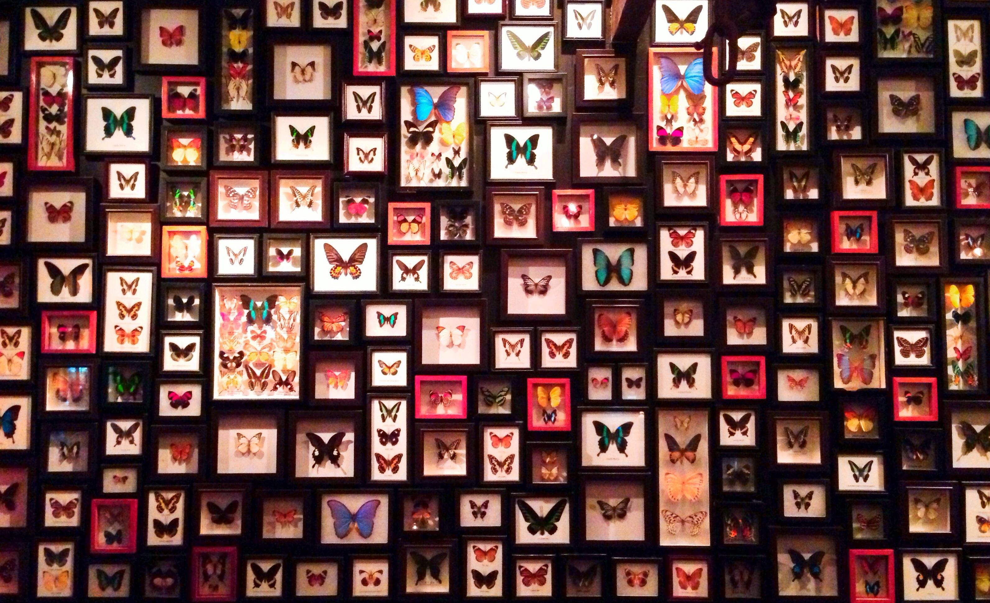 Hintergrundbilder : Reise, Mobile, Schmetterling, Restaurant, Rahmen ...