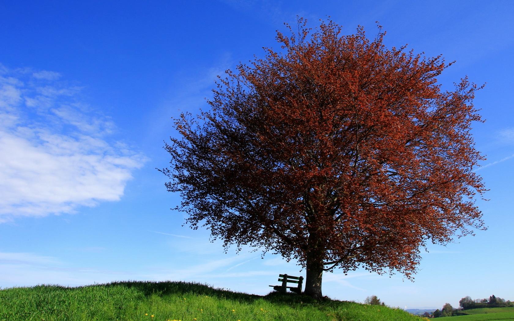 Смотреть картинки деревья
