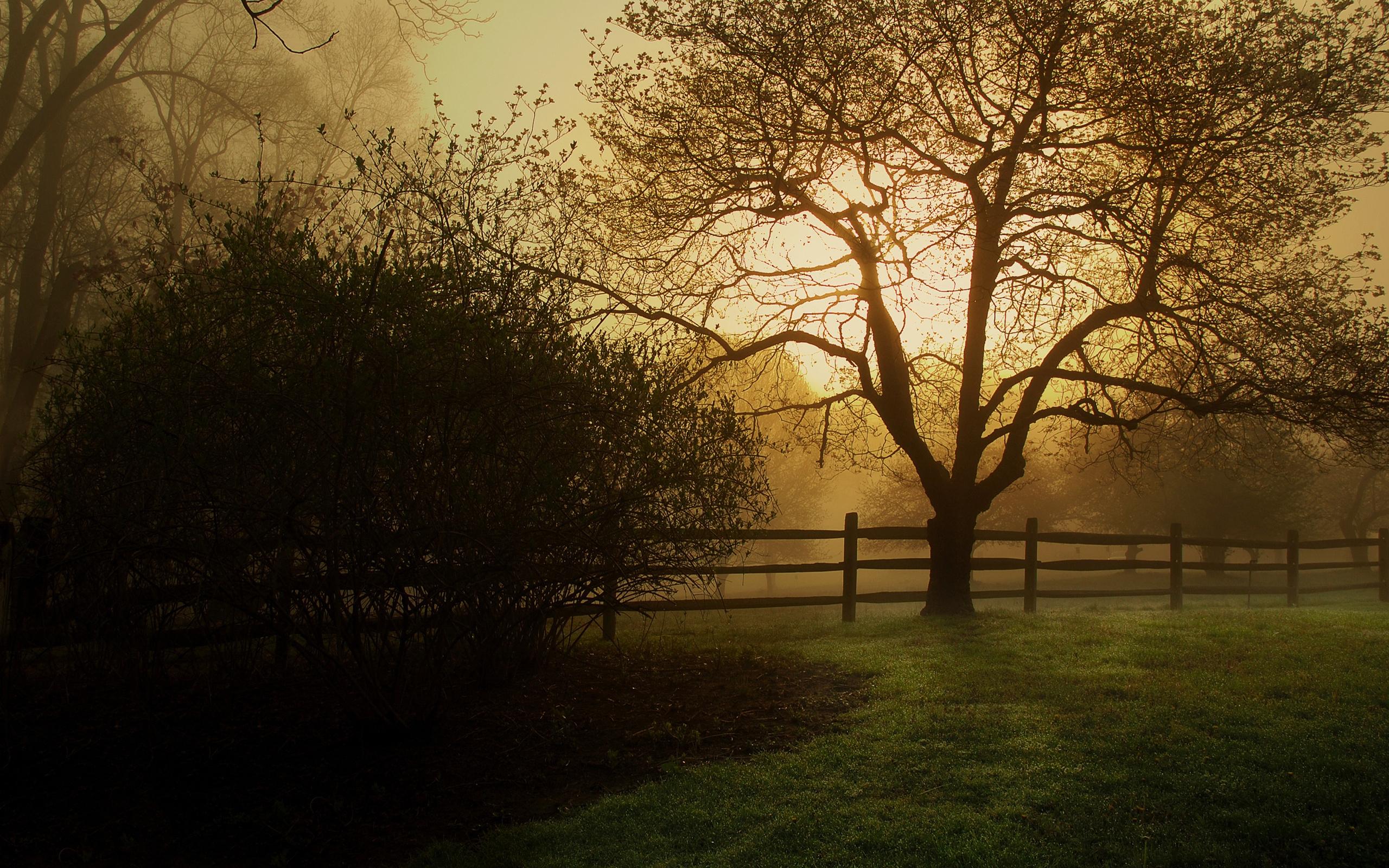 hintergrundbilder : baum, zaun, schutz, nebel, umreißt, busch, licht