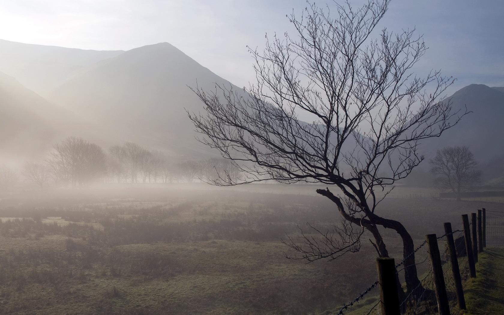 hintergrundbilder : baum, kofferraum, verdrehen, nebel, berge, zaun