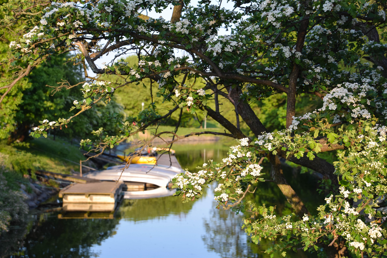 Fondos de pantalla rboles barco jard n naturaleza for Arbol ciruelo de jardin