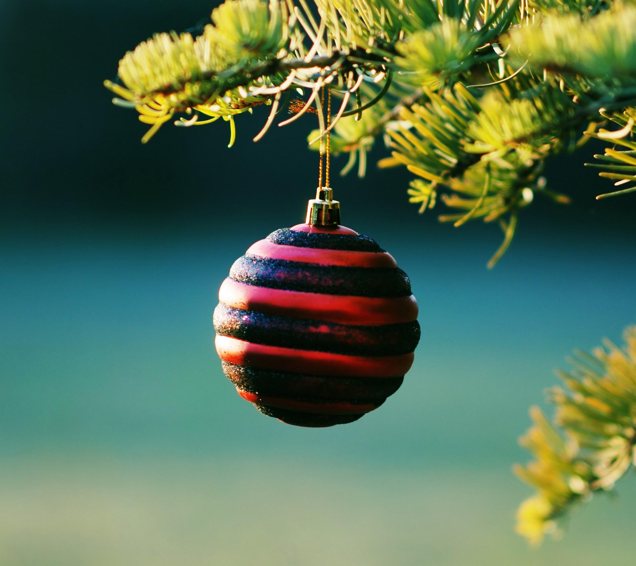 Masaüstü : Ağaçlar, Şube, yeşil, Noel ağacı, Noel süsleri ...