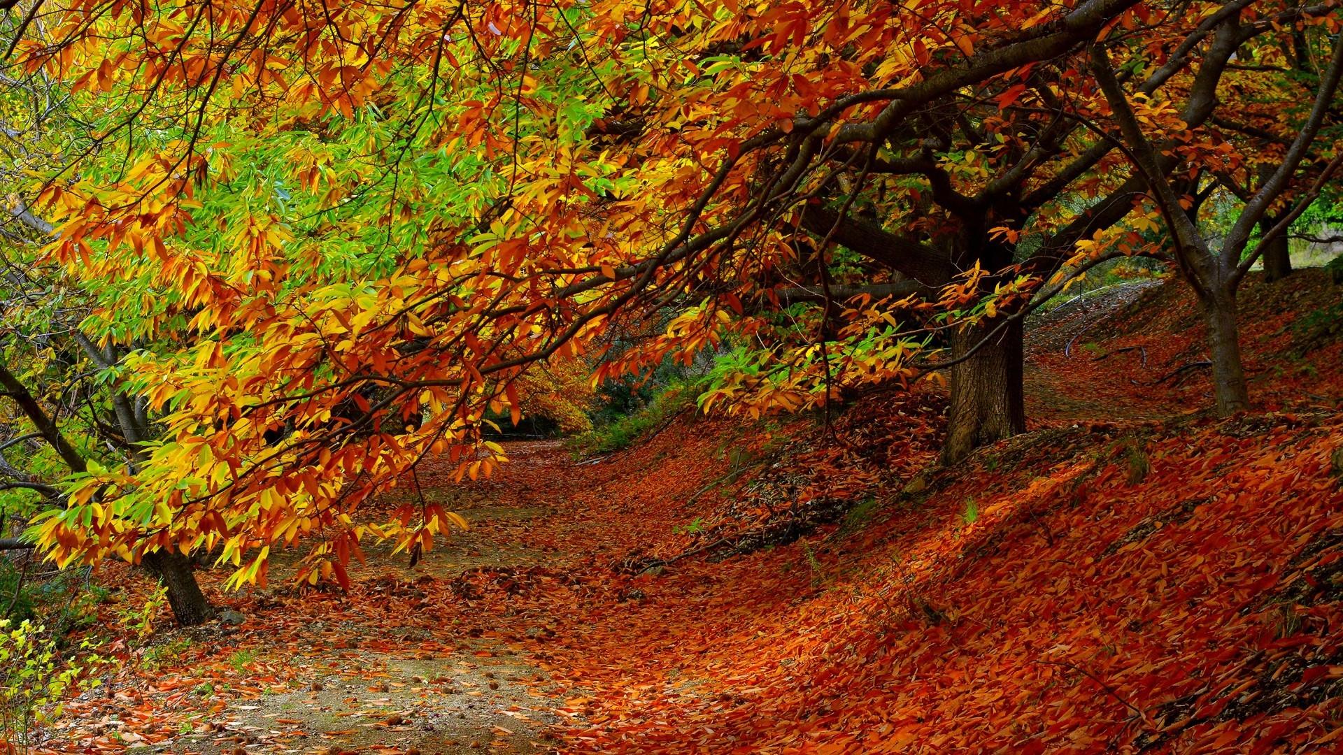 Sfondi alberi colorato autunno le foglie natura for Immagini autunno hd