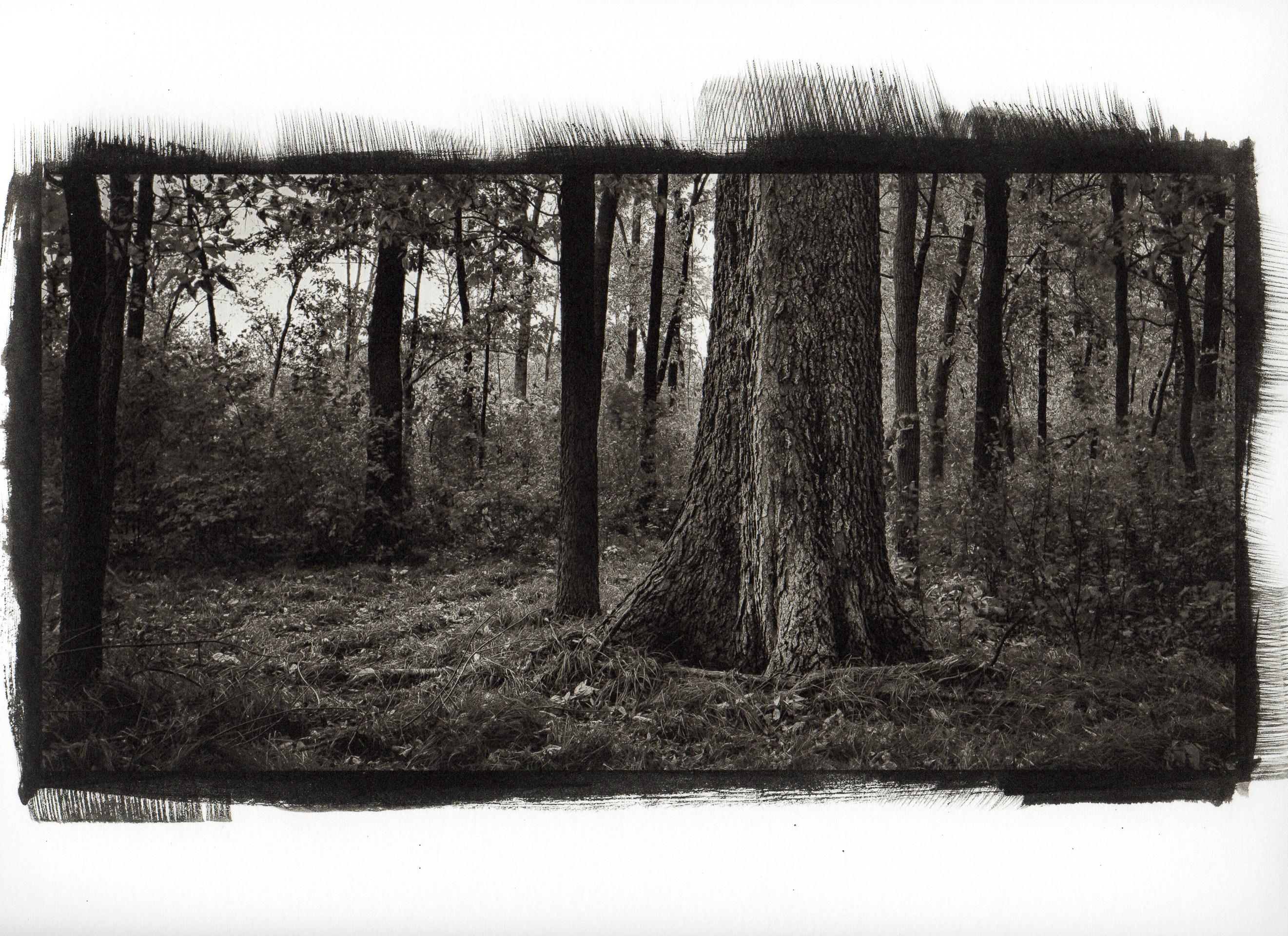 Hintergrundbilder : Bäume, Zeichnung, Wald, Pflanzen, Holz, USA ...