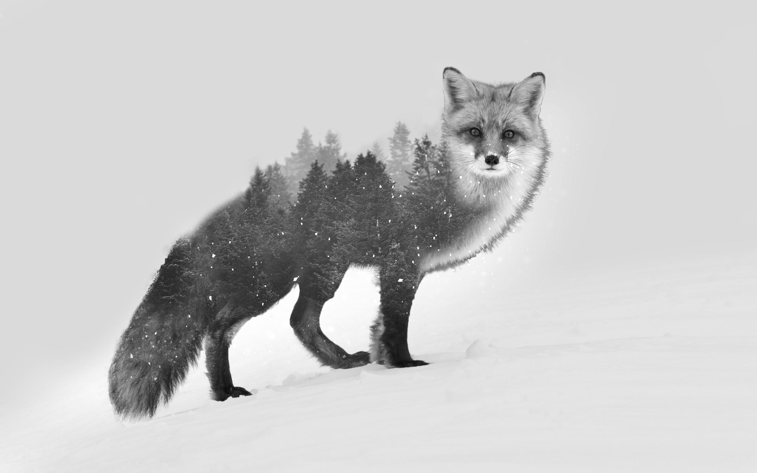 Fondos De Pantalla Arboles Dibujo Bosque Animales Monocromo