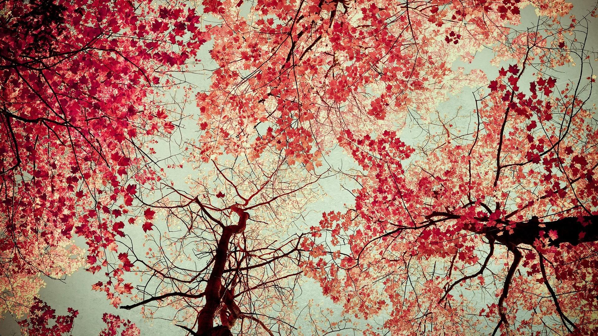 Fondos De Pantalla : Árboles, Otoño, Naturaleza, Rojo