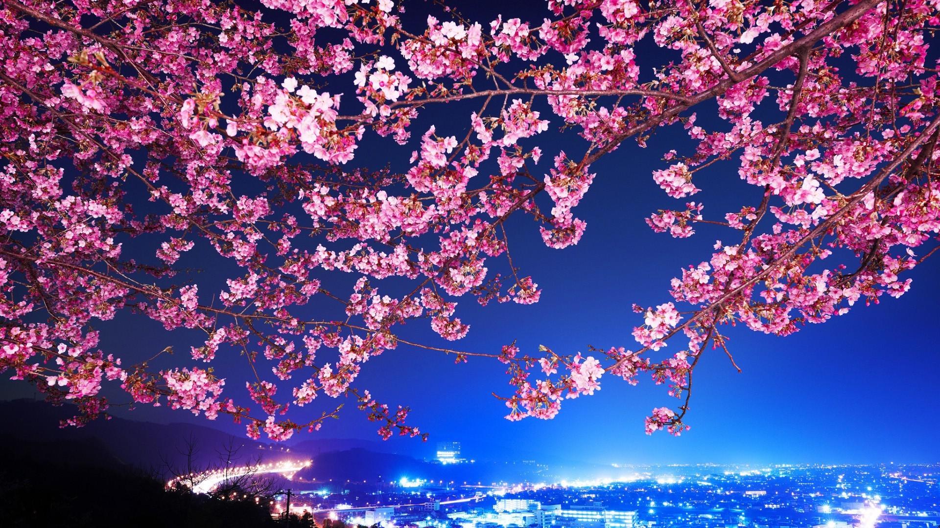 Wallpaper Trees Flowers City Cityscape Branch Blue Cherry Blossom Tokyo Night View Tree Flower Plant 1920x1080 Kotan 248225 Hd Wallpapers Wallhere