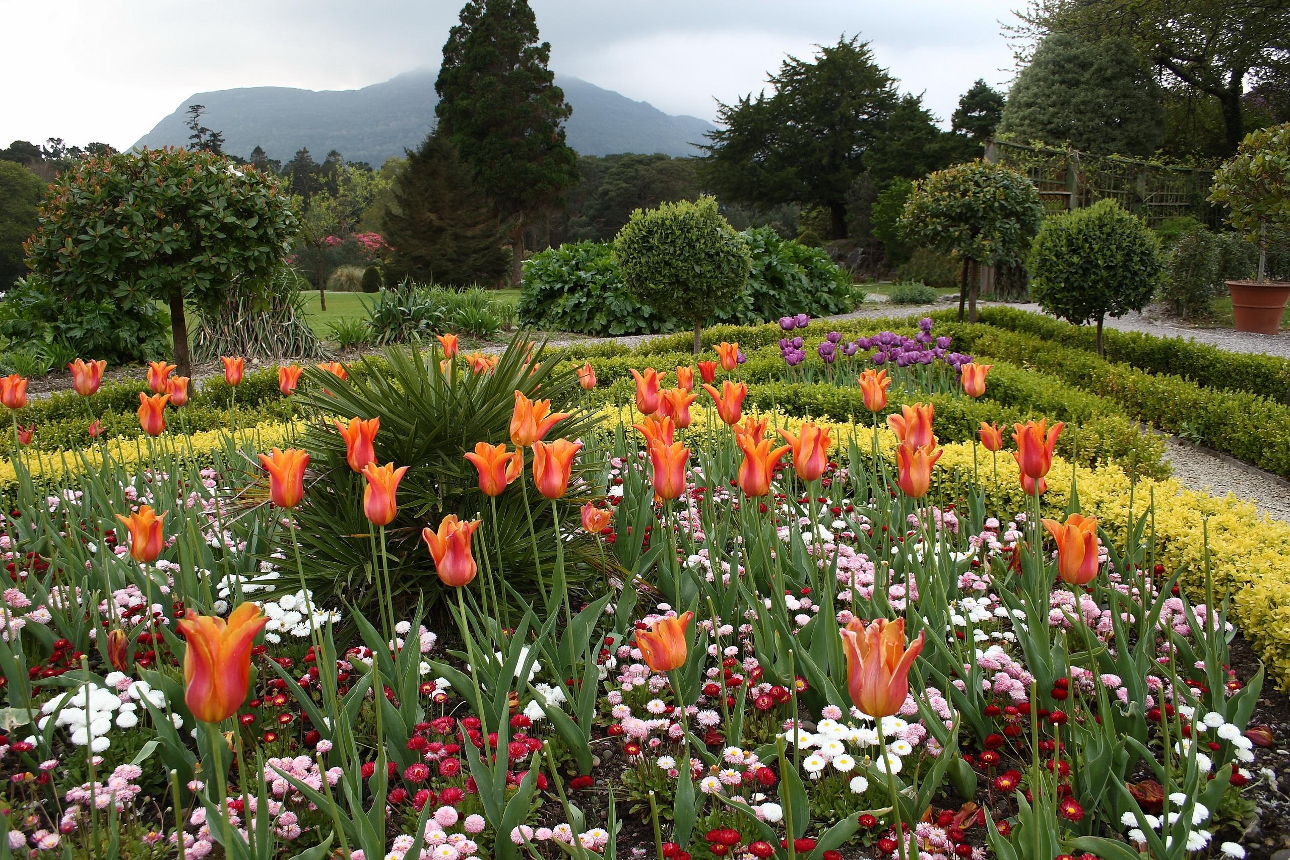 фото цветов и растений красивые джекман
