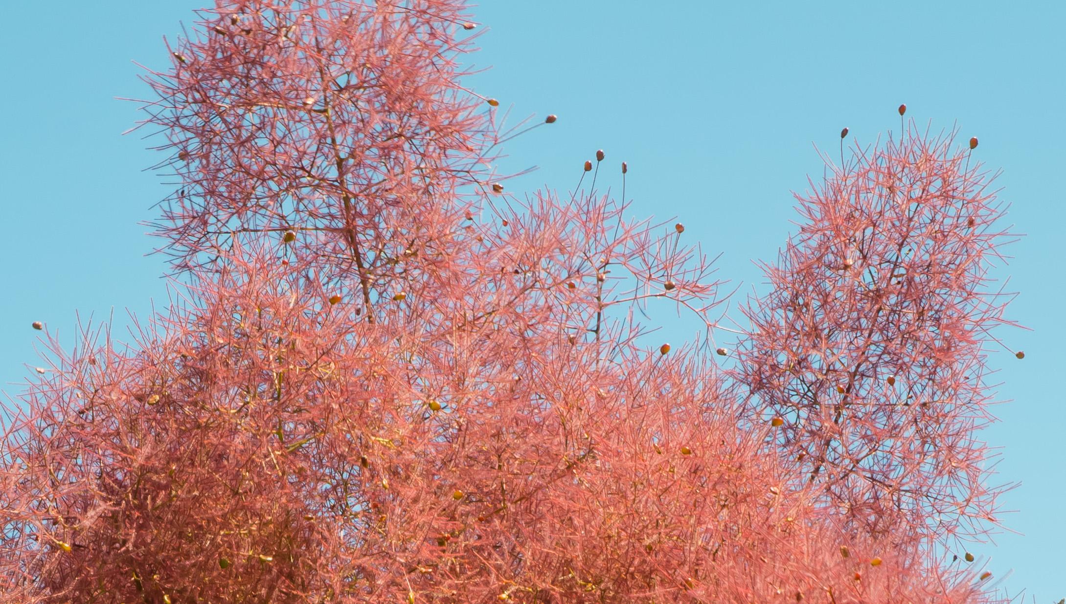 Papel De Parede Rvores Flores Ramo Arbustos Flor Primavera  -> Papel De Parede Para Sala Bordo