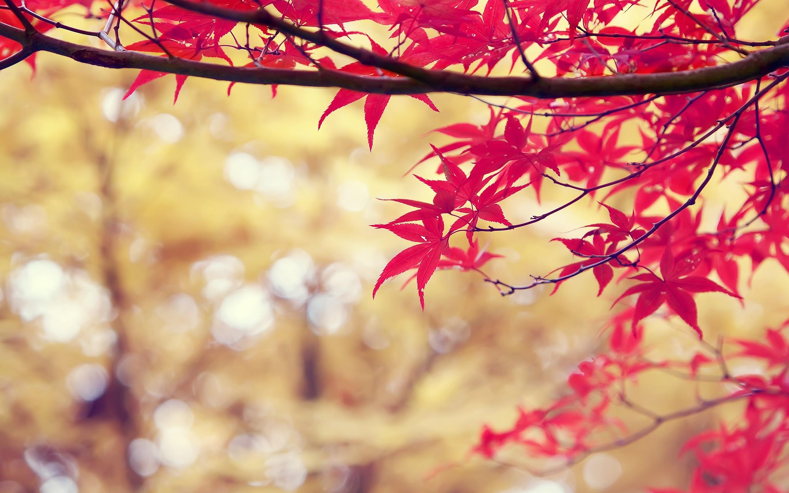 цены лучшие когда желтеют листья в архызе аромат для