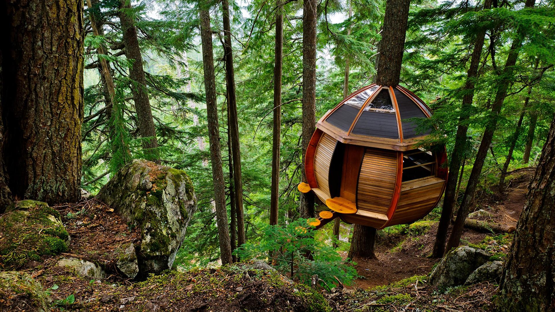Fond d 39 cran des arbres architecture roche la nature for Maison archi foret