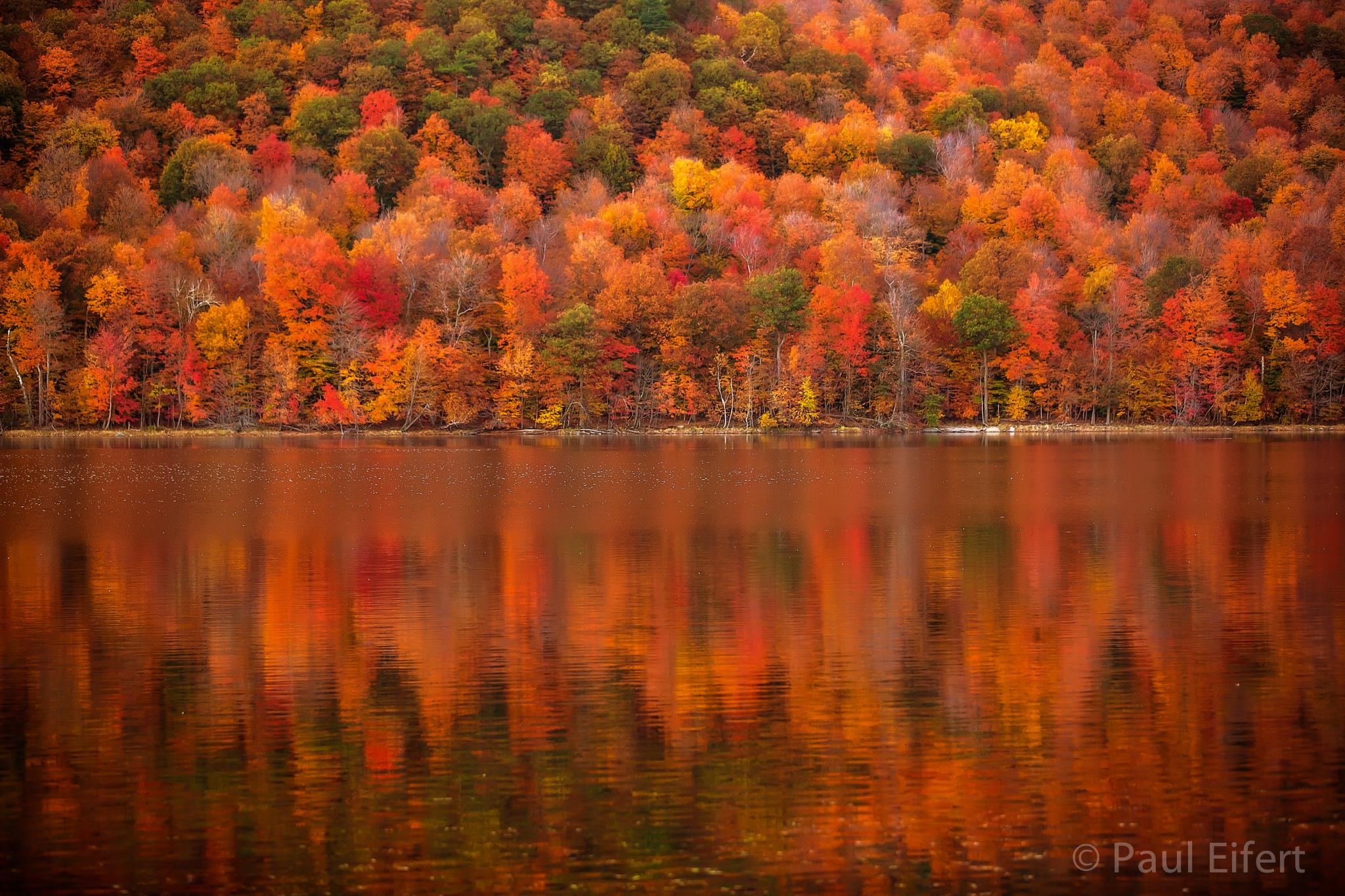 Hintergrundbilder Baume Wald Fallen Blatter See Wasser Natur