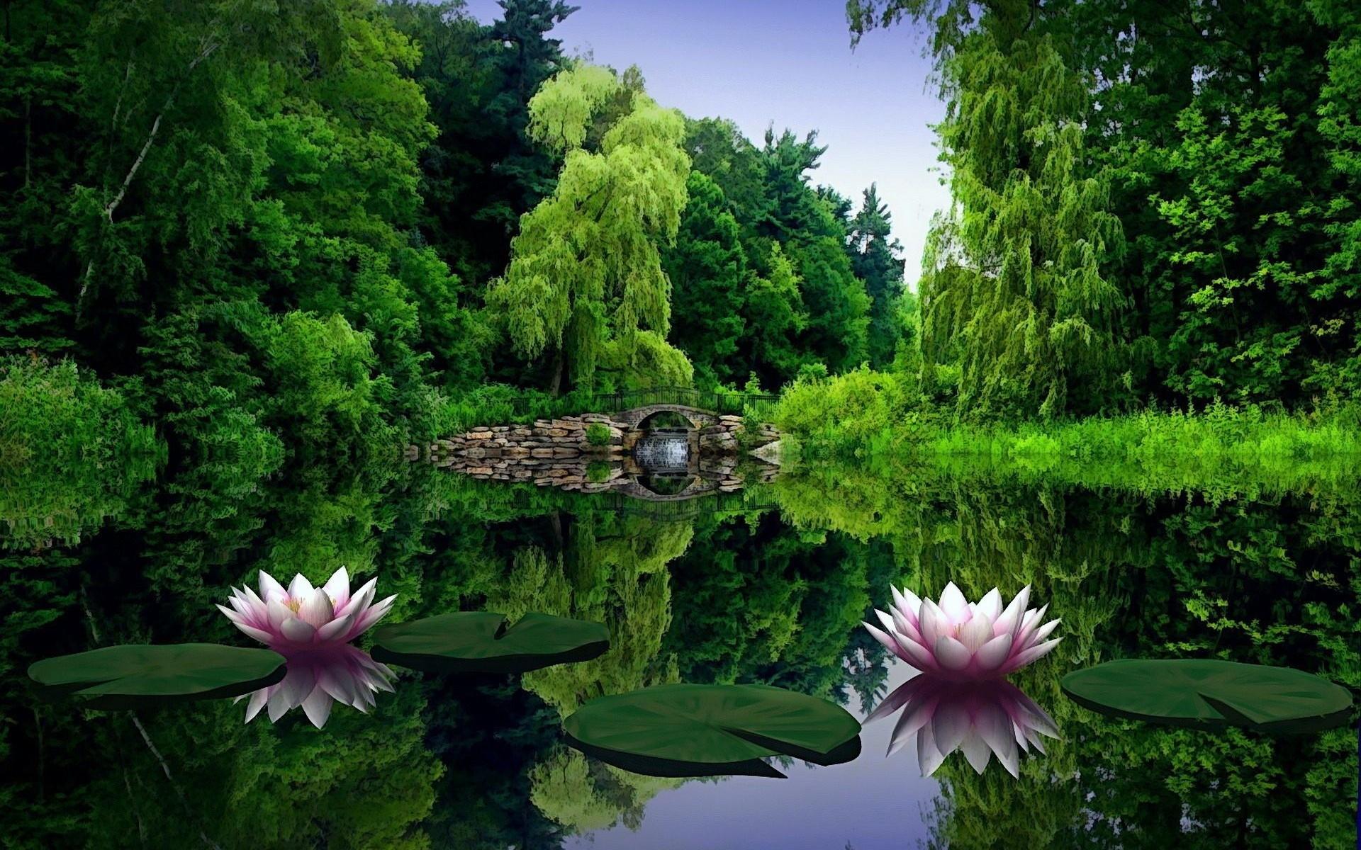 анимационные красивые фото про природу и цветы