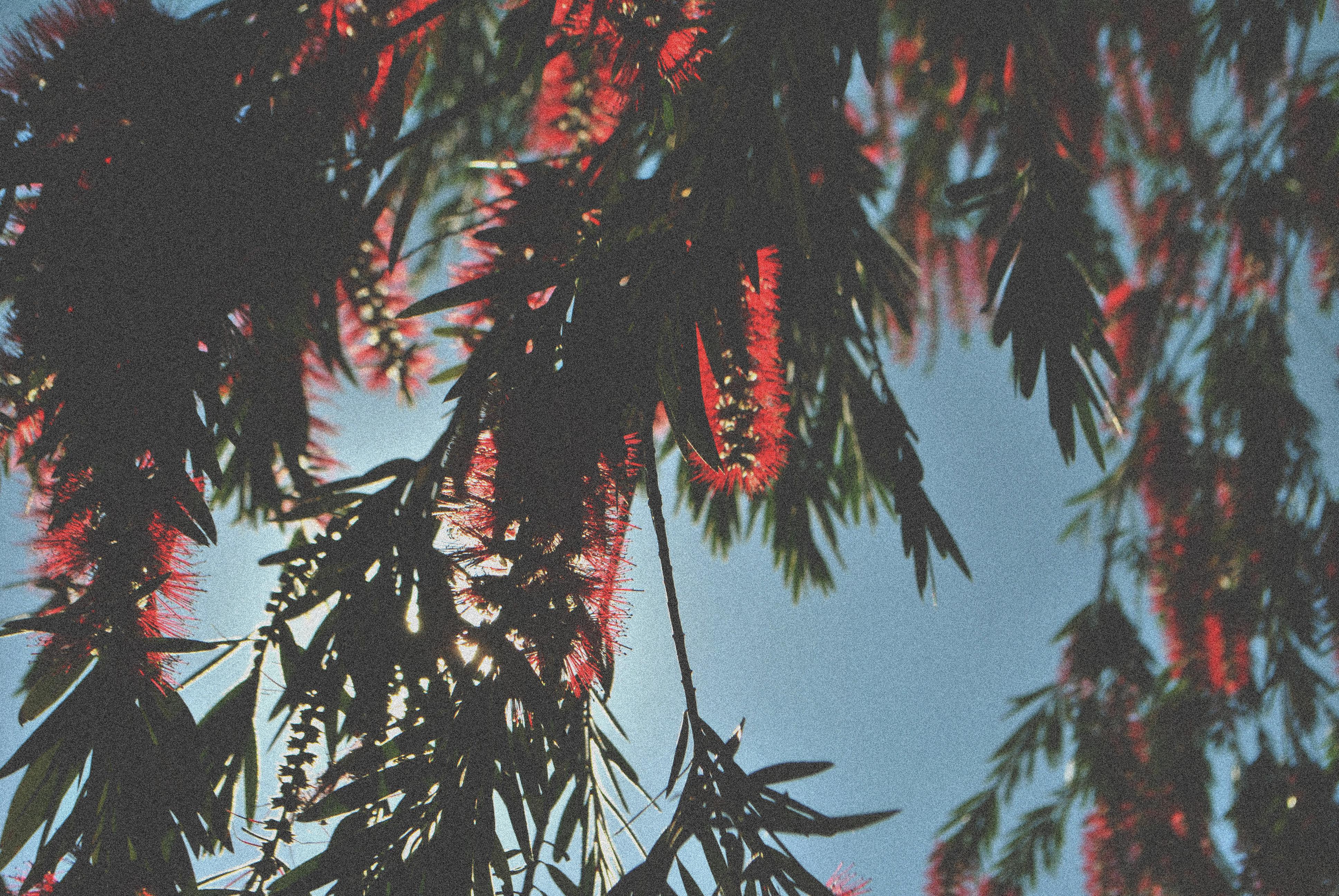 Wallpaper Trees Forest Leaves White Black Photoshop Portrait