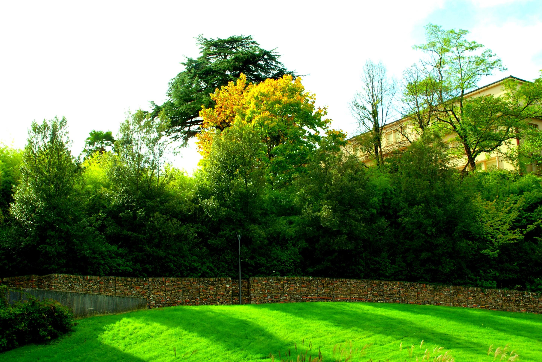 Paesaggista latest giardino natura cortile albero fiore cortile prato botanica arbusto giardino - Architetto prato ...