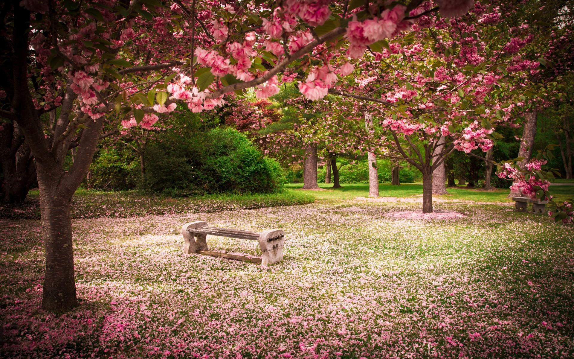 Fondos De Pantalla : Árboles, Jardín, Parque, Banco