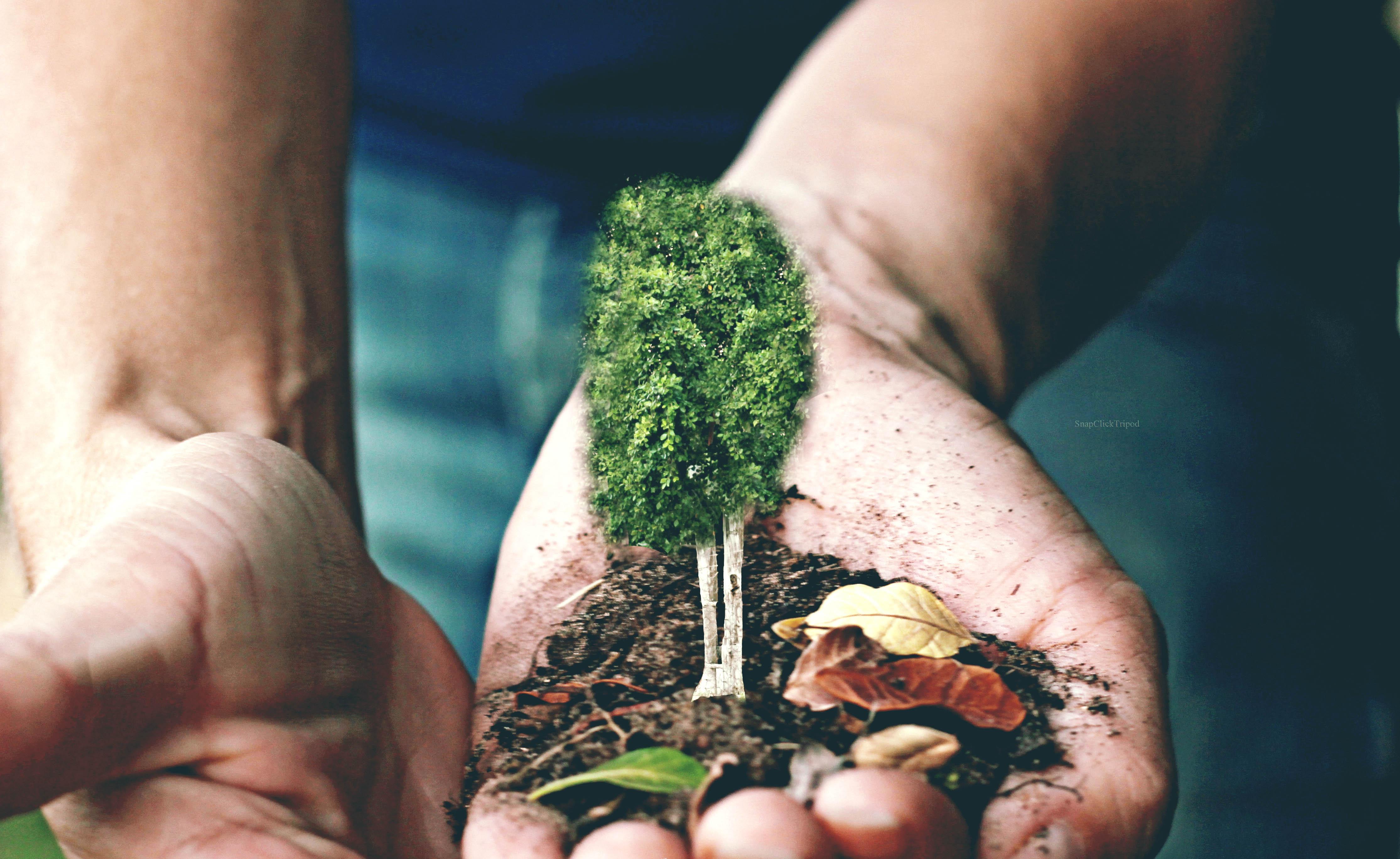 Fondos de pantalla : Árboles, árbol, ambiental, planta, mano, uña ...
